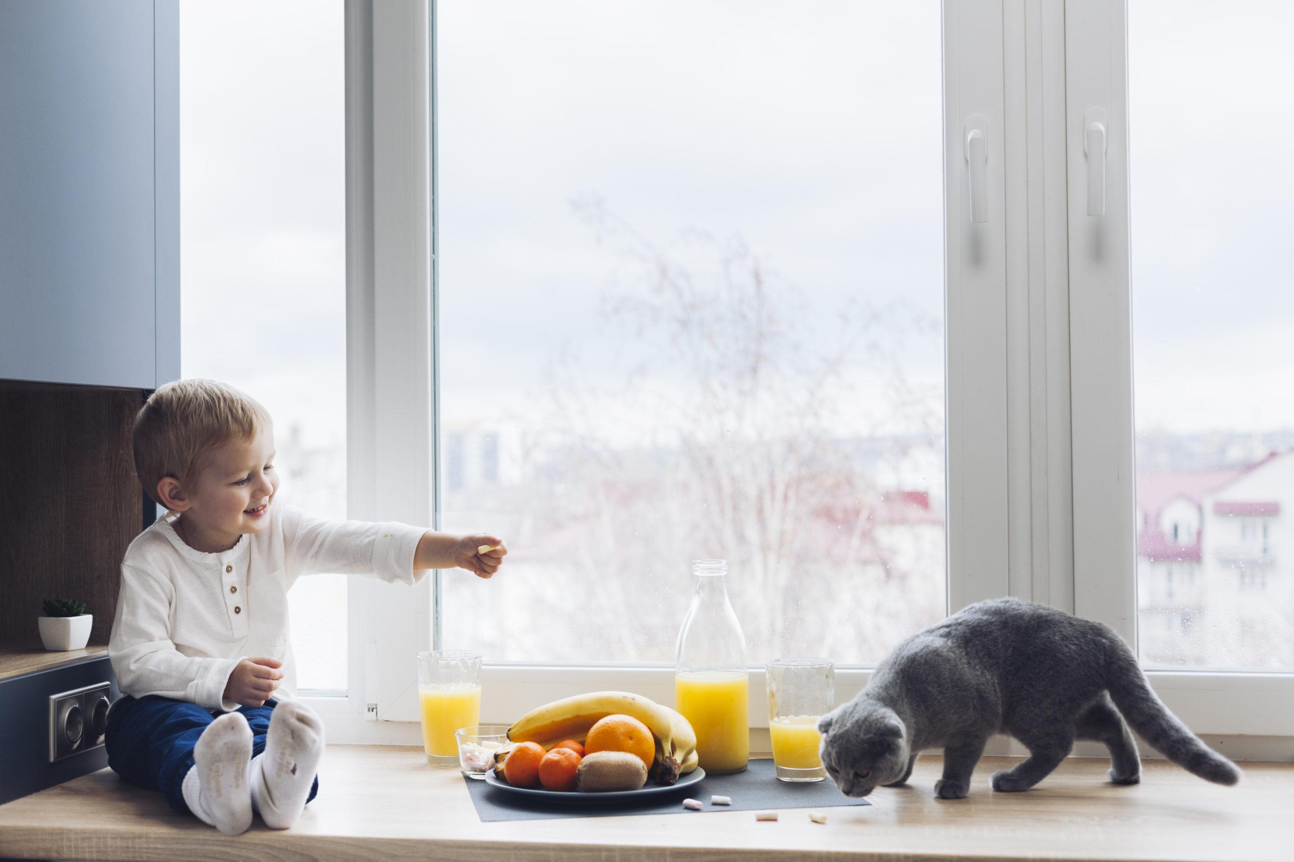自宅で飼う猫のしつけの超簡単な方法。