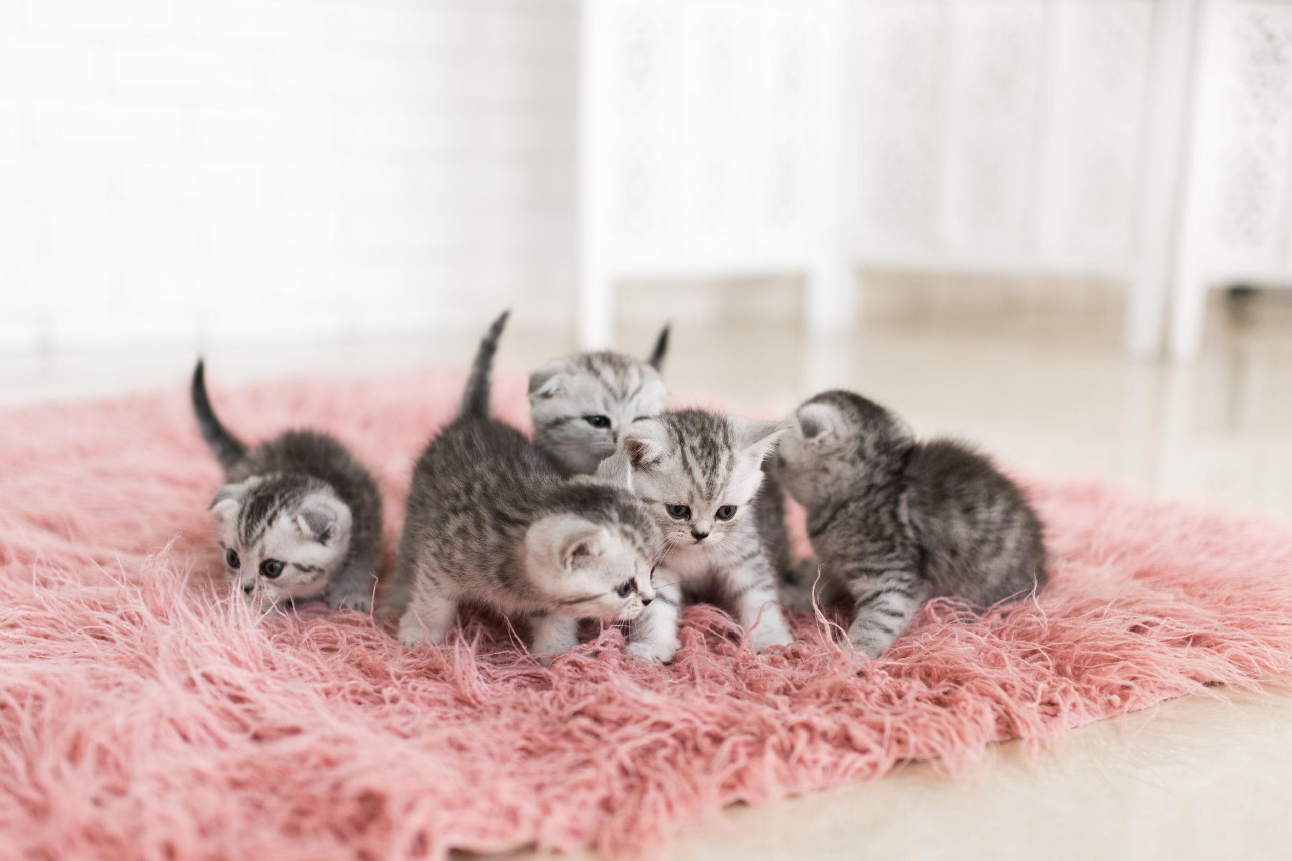 自宅での猫との生活のメリット・デメリット