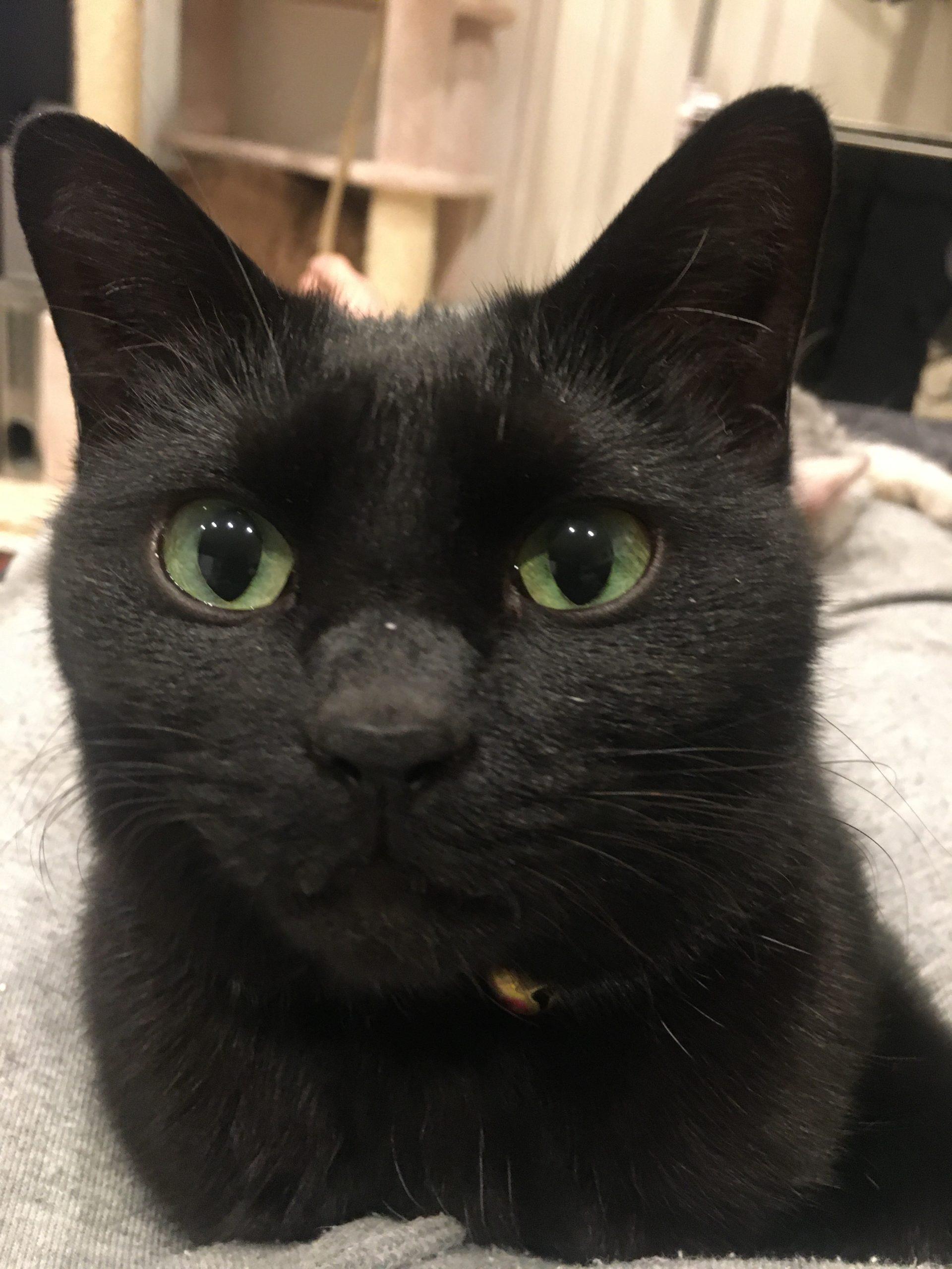 とある理由で連れて来た黒猫:ジジ