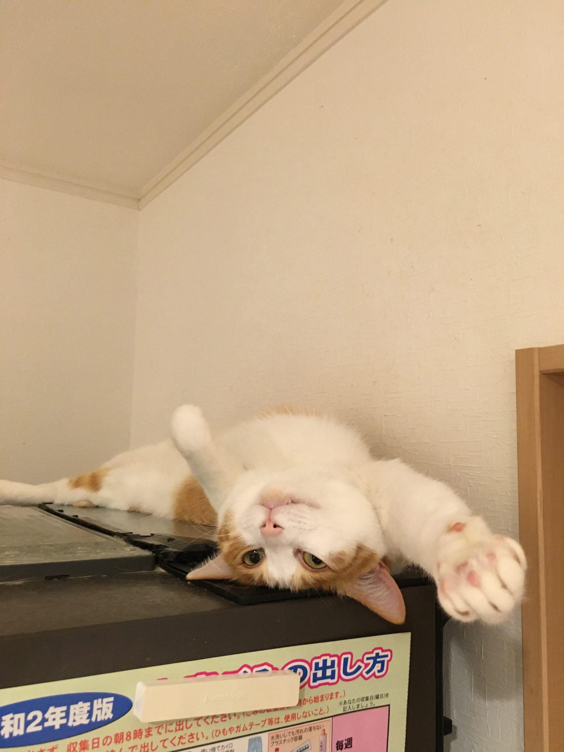 まとめ:我が家の猫が可愛すぎる!