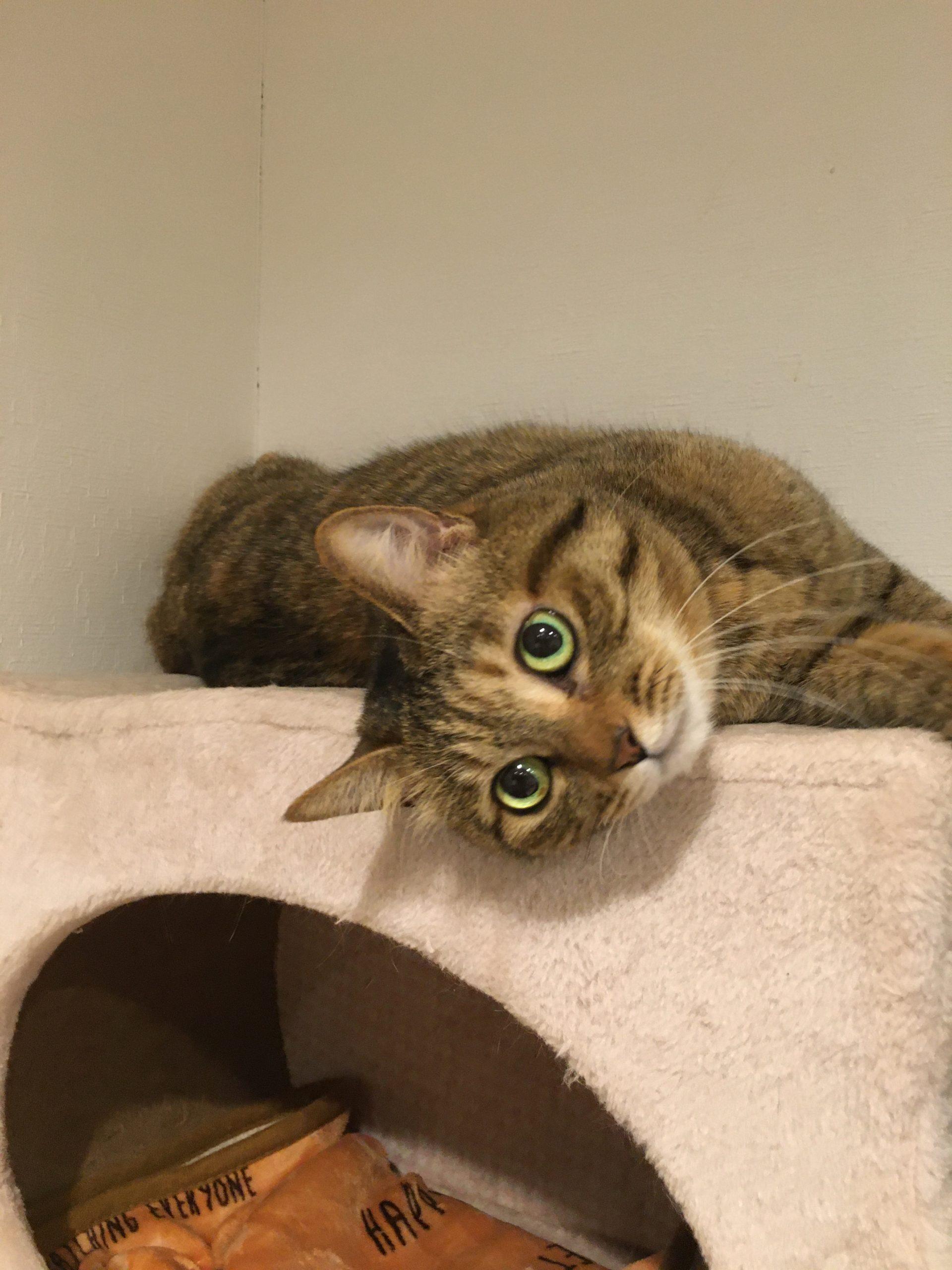 我が家の猫かぁちゃん:サミー