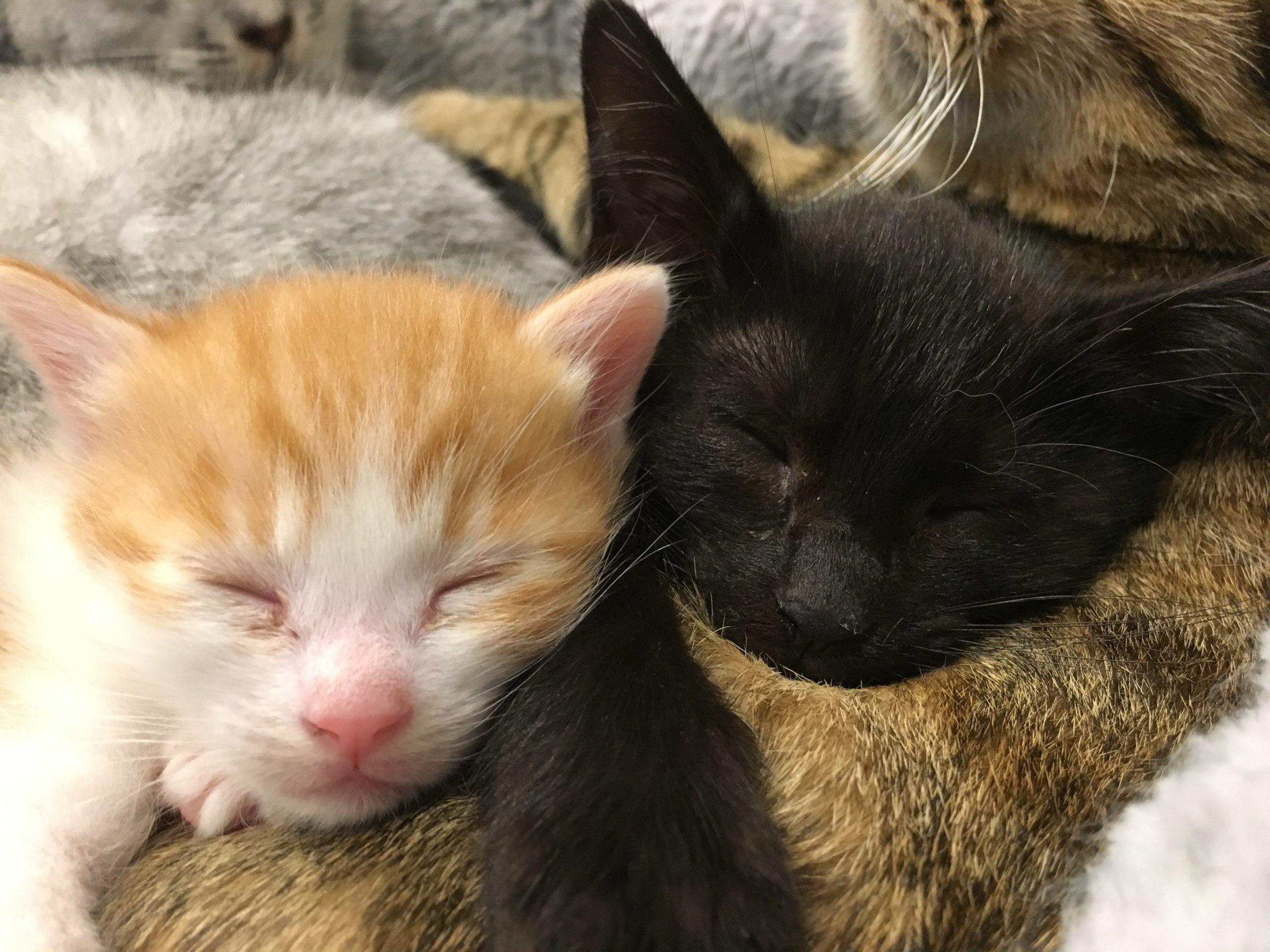 【 外出自粛 】自宅で癒しを求めるなら猫と生活してみませんか?