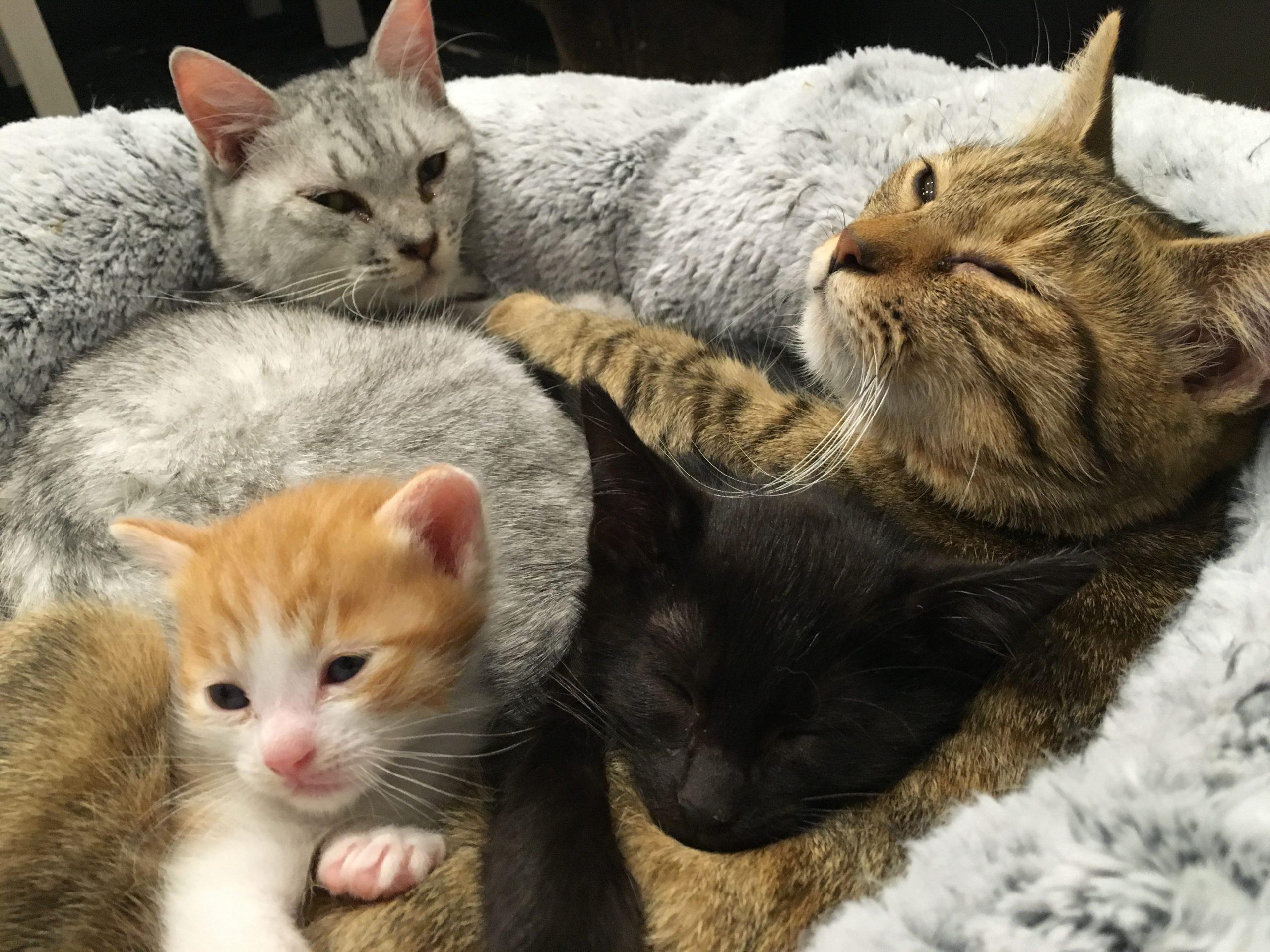 【 緊急 】助けてください!我が家の猫が可愛すぎるんですが!