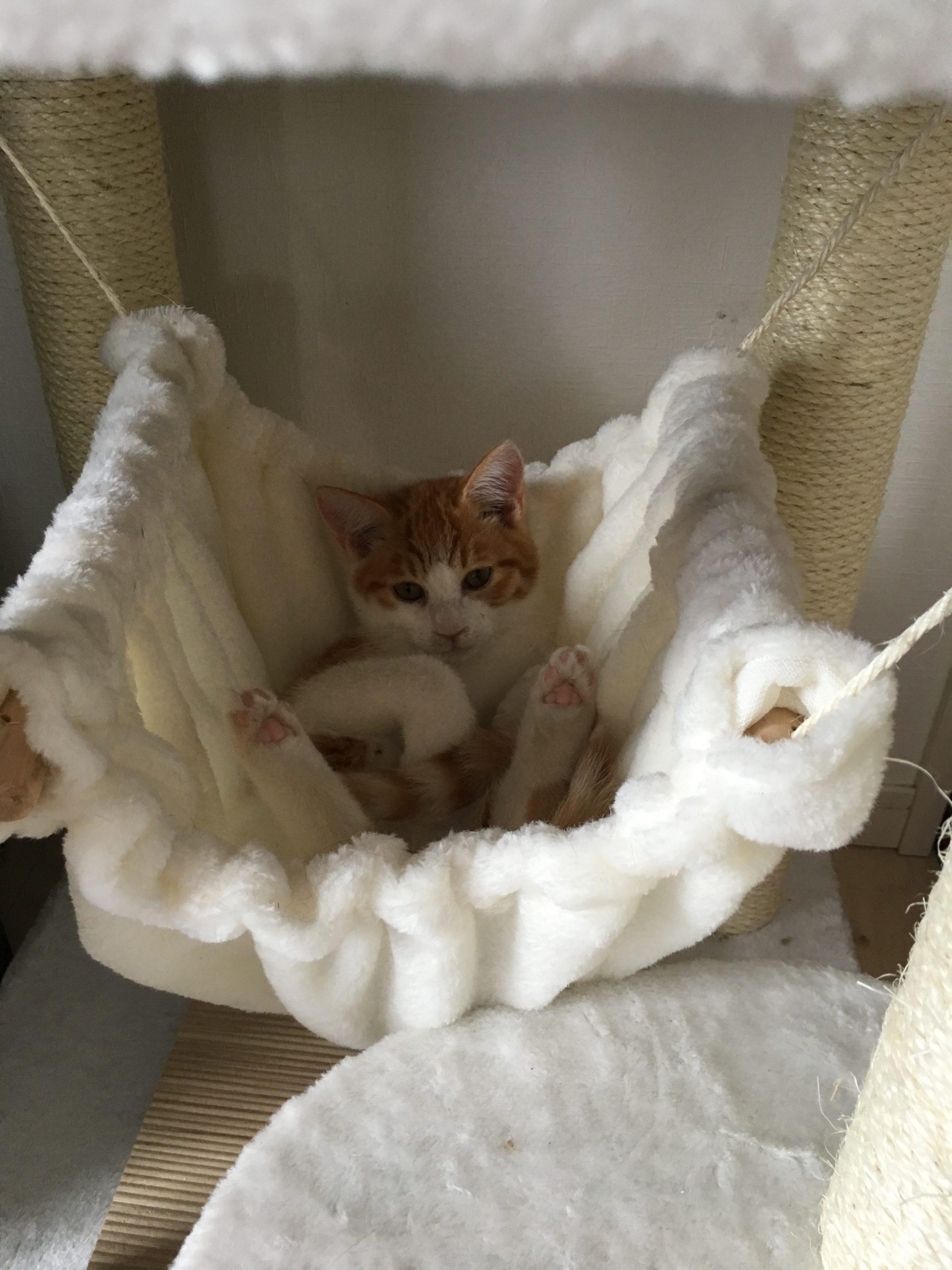 自宅での癒しを求めるなら猫と生活してみませんか?