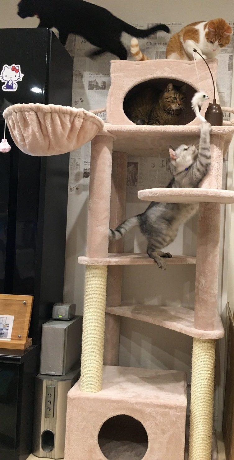 ネコちゃんとの暮らしに必要なモノ10選
