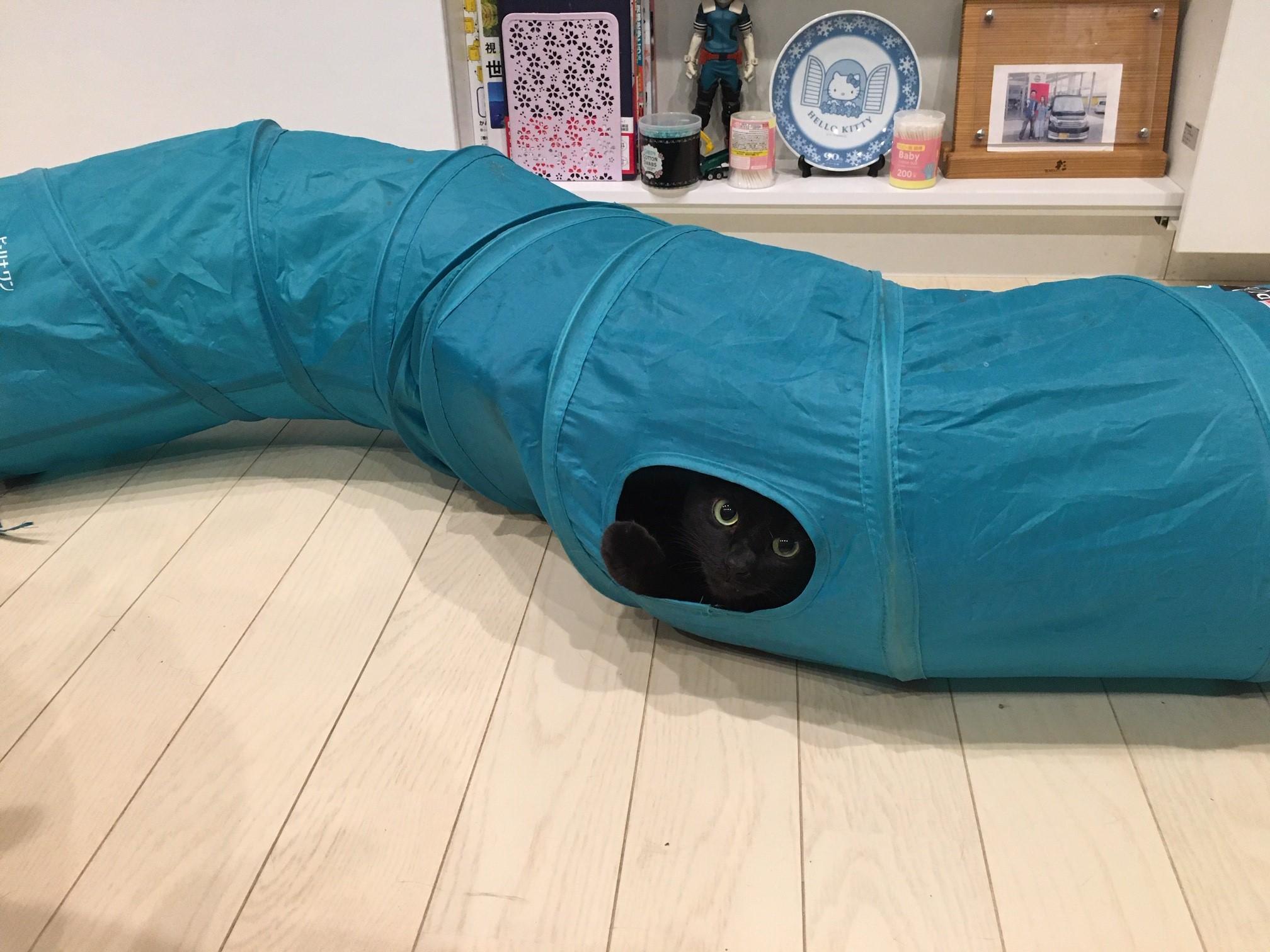 猫トンネルでネコちゃんに遊び場所を作る【ストレス緩和にもなる】