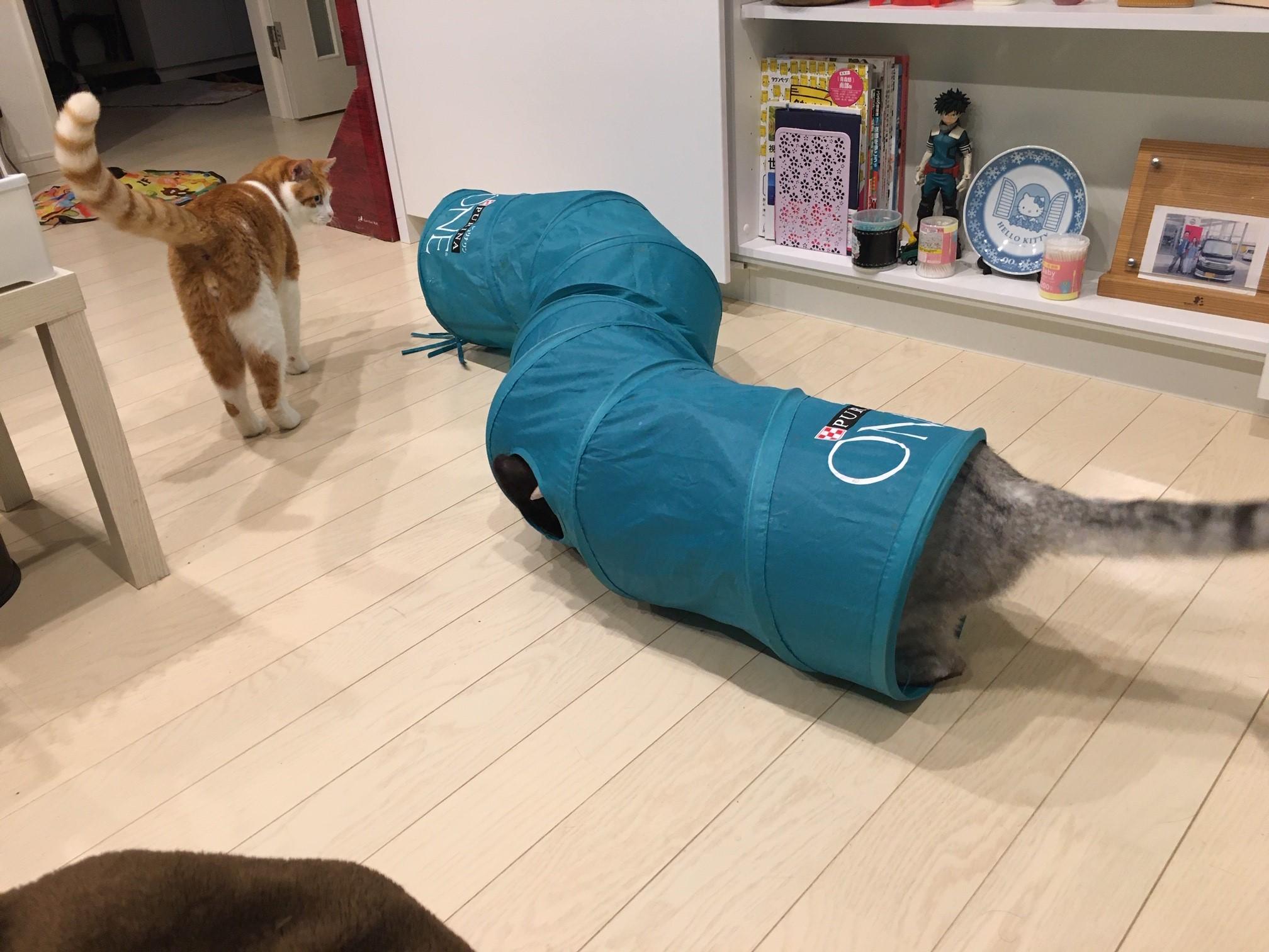 猫トンネル:使い方