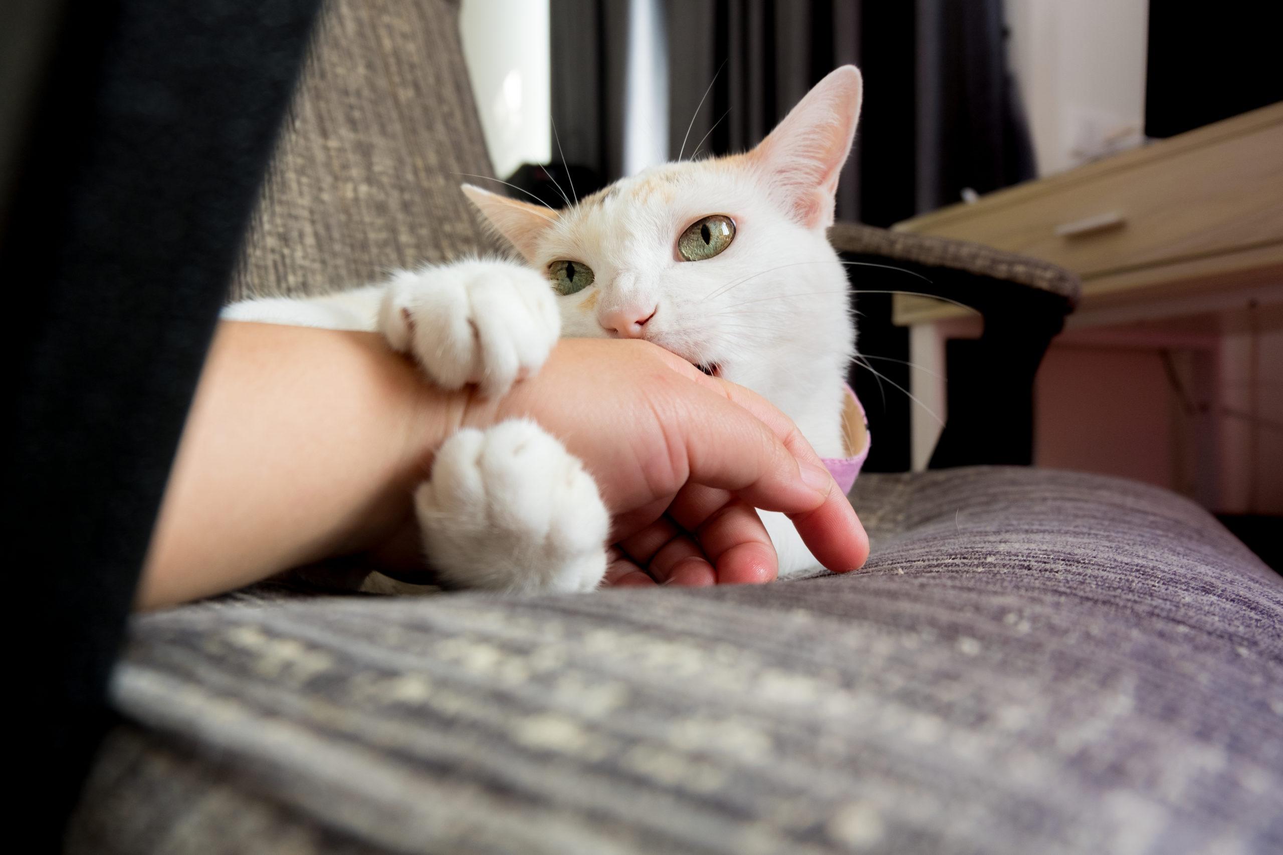 ネコを撫ですぎると急に噛みついてくるのは何故?ネコにもマナーが必要:まとめ