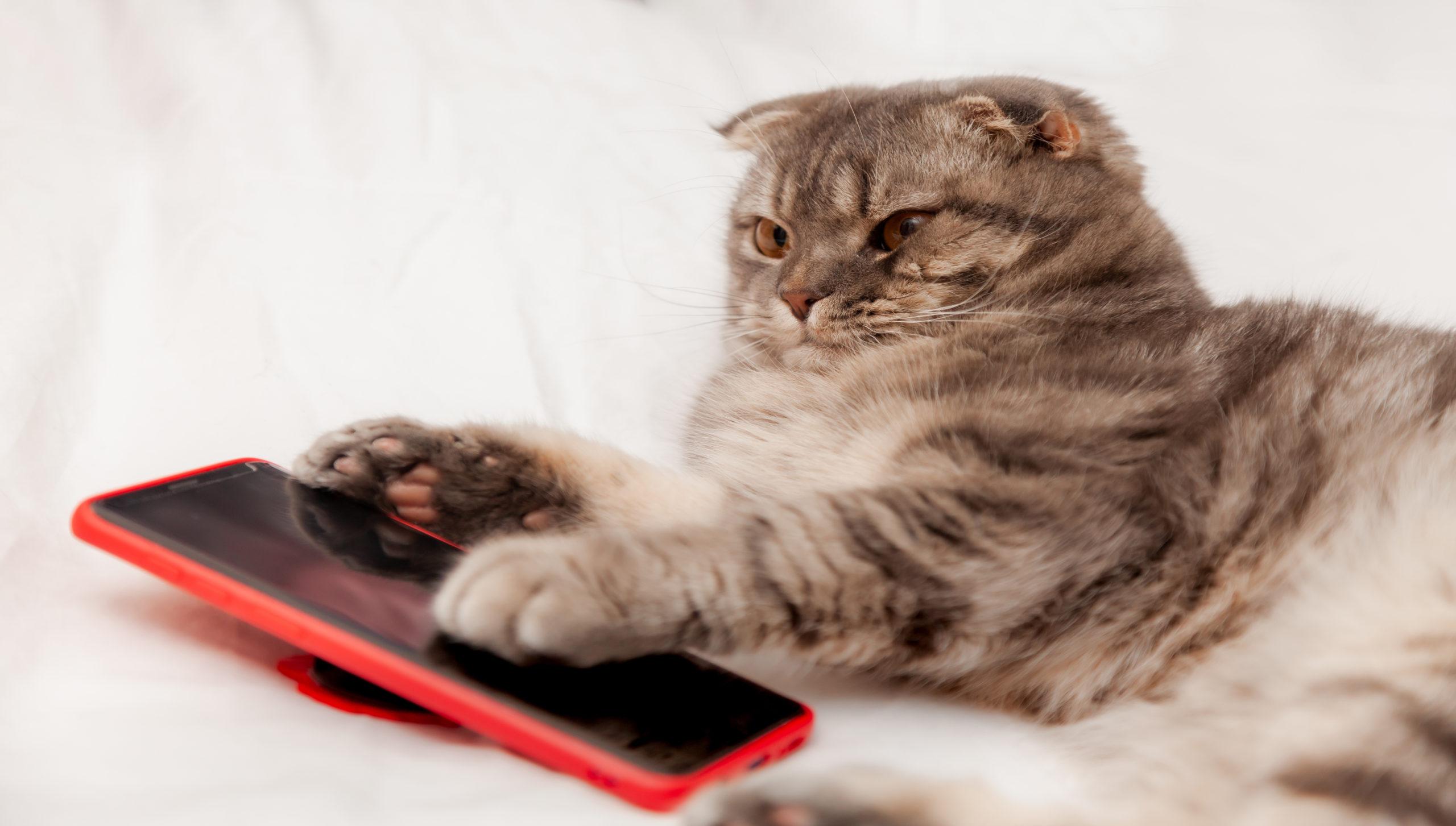 ネコは電話越しでも名前を聞き分けられる