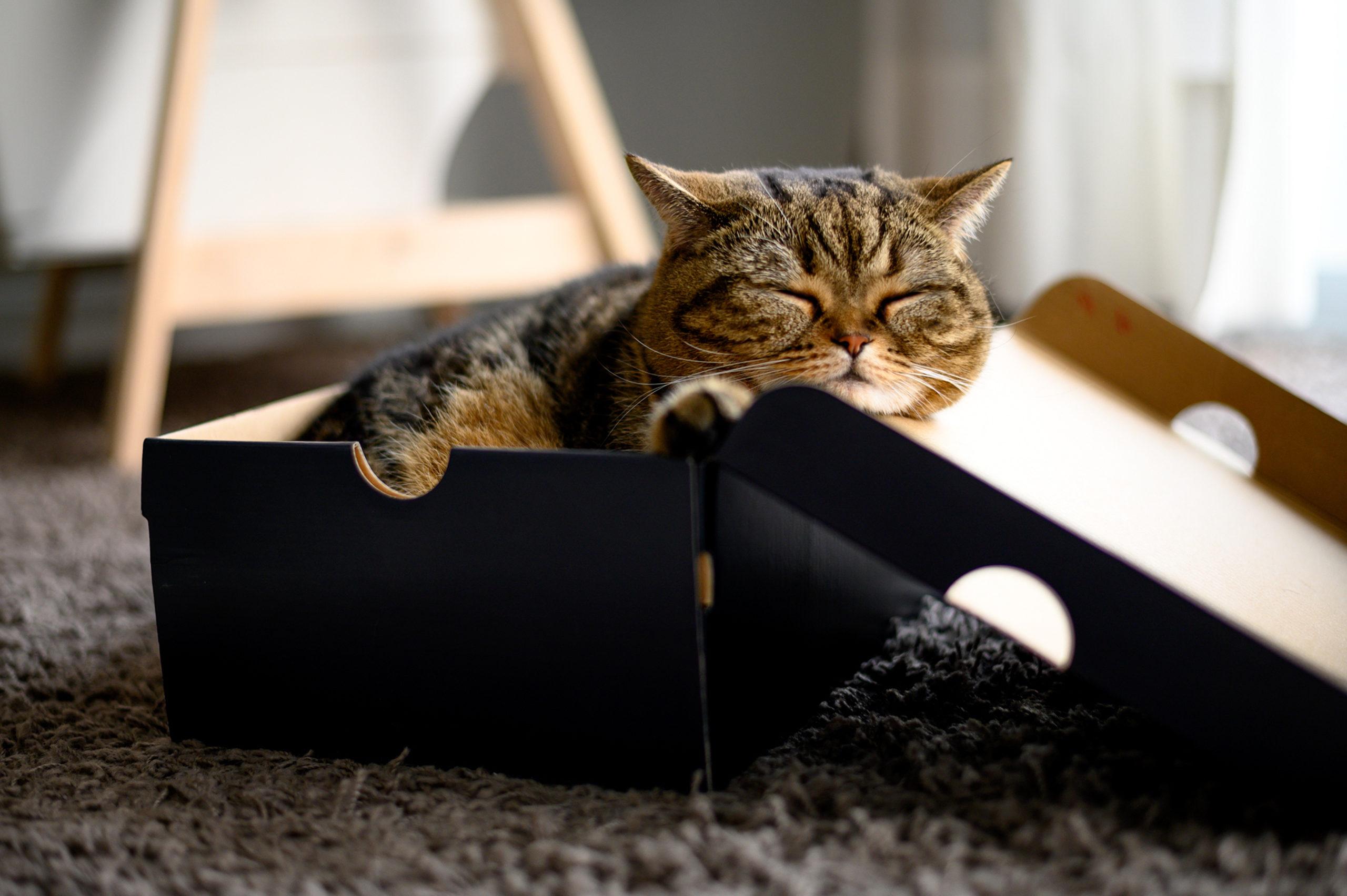 ネコが段ボール箱を好きな理由3つ