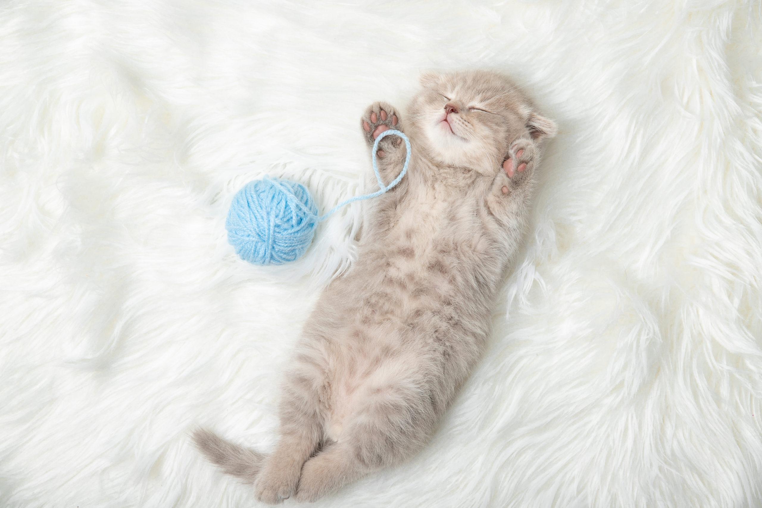 ネコっていつ見ても寝ている気がするのは何故?「ネコは寝る子」