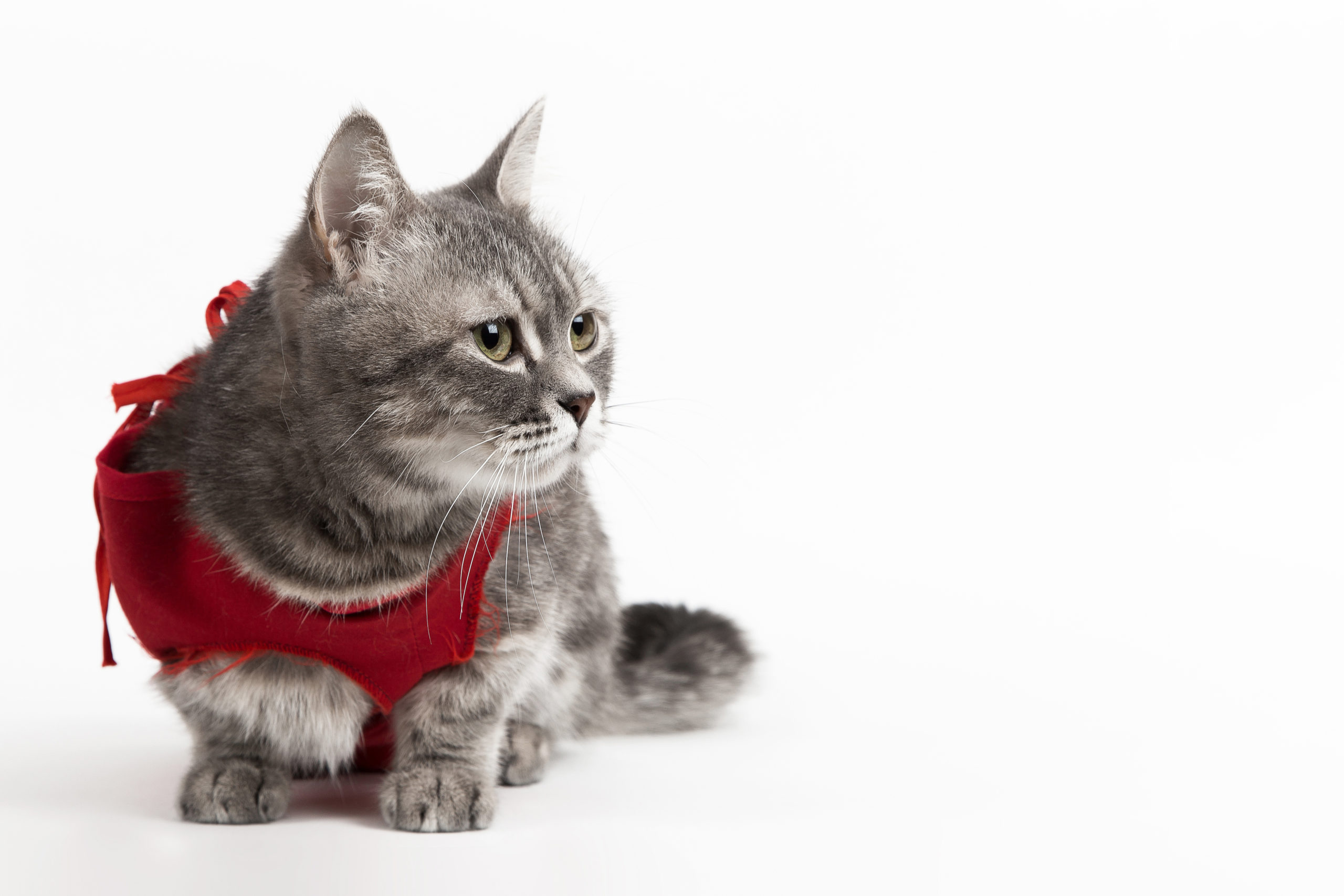 ネコは室内飼いでも避妊・去勢手術は必要?【手術はメリットあり】