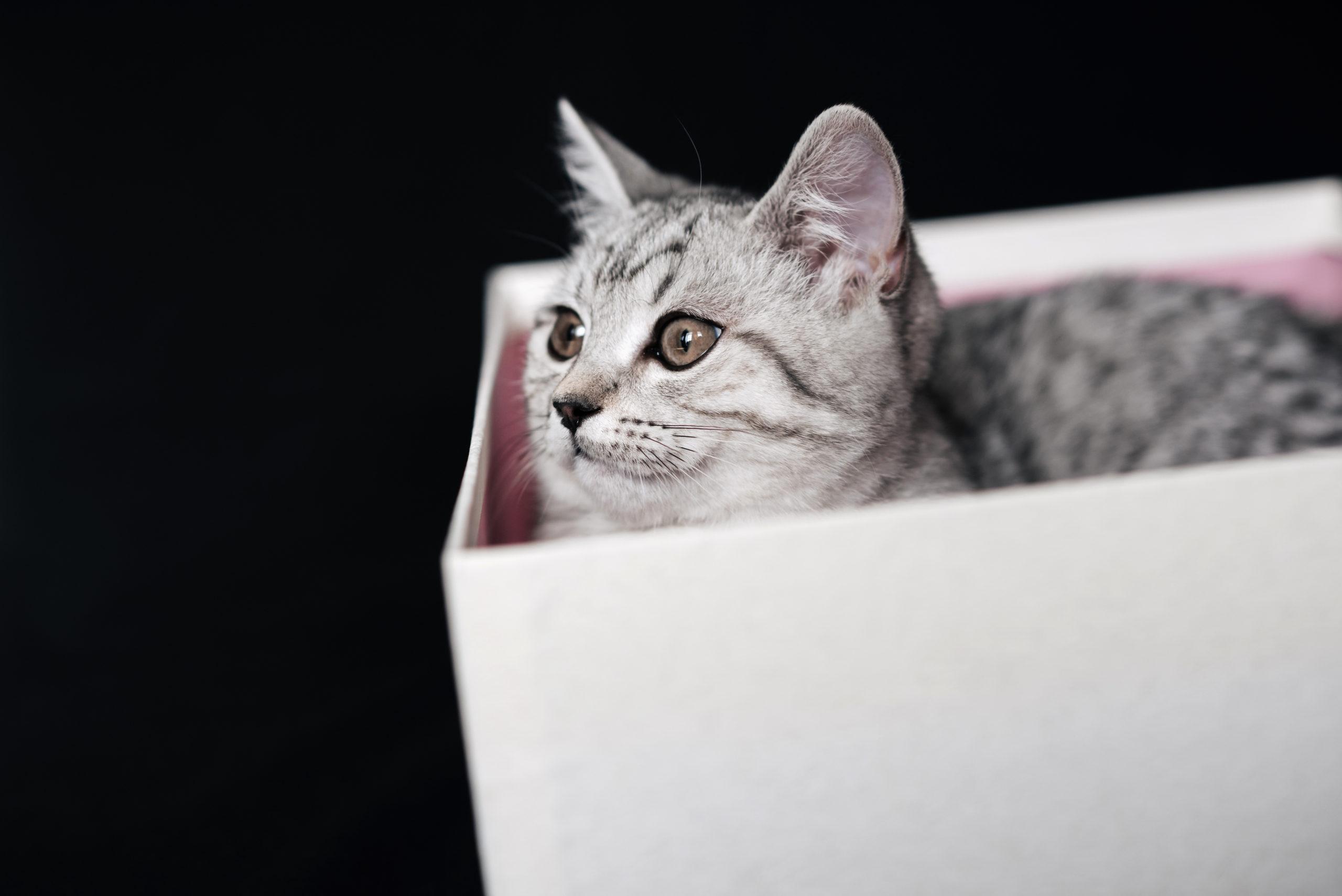 ネコが段ボール箱を好きな理由3つ【理由は安心感です】
