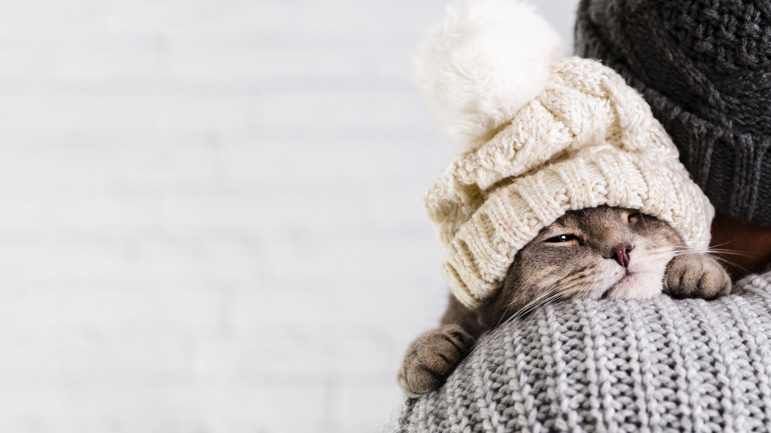 ネコは室内飼いでも避妊・去勢手術は必要?:まとめ