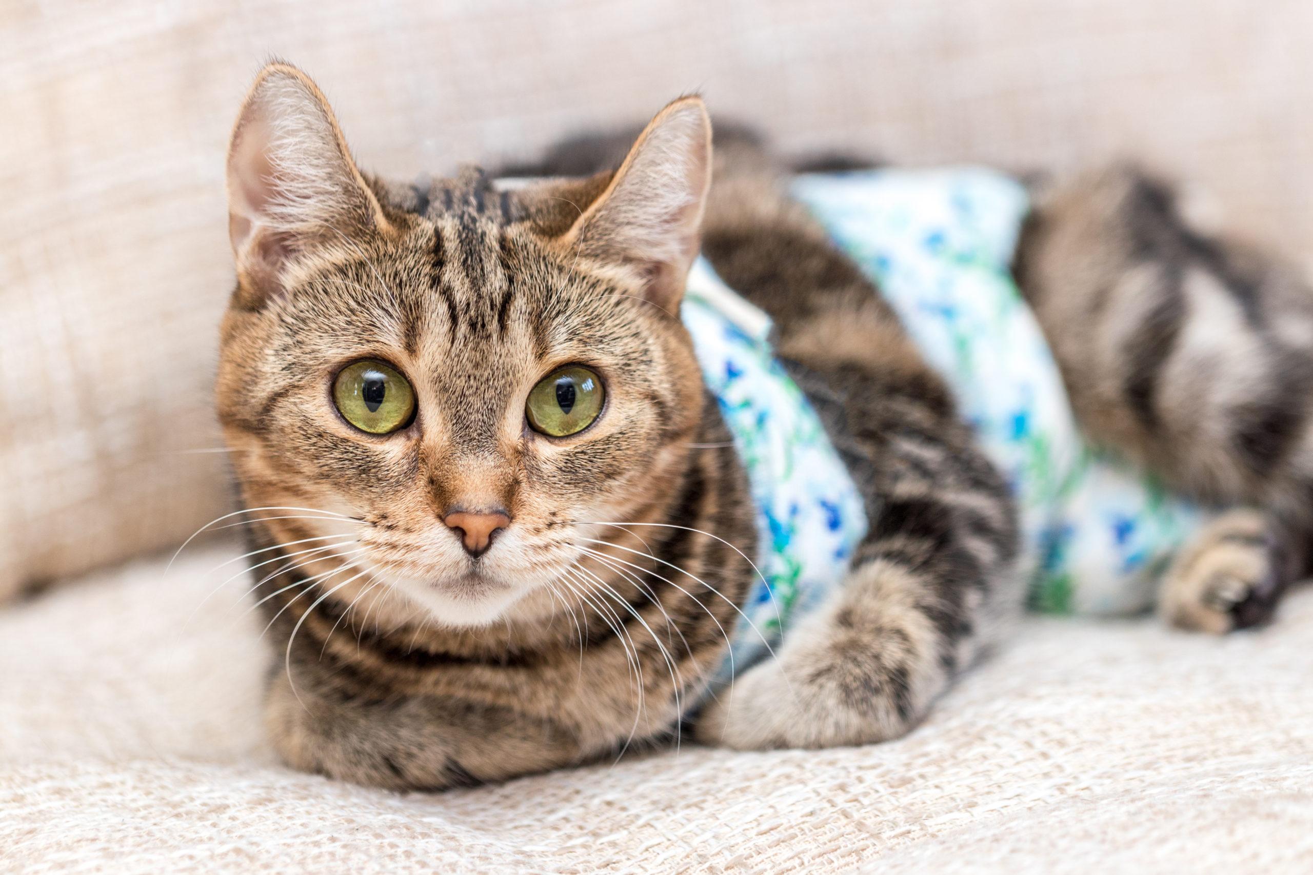 ネコは室内飼いでも避妊・去勢手術は必要?