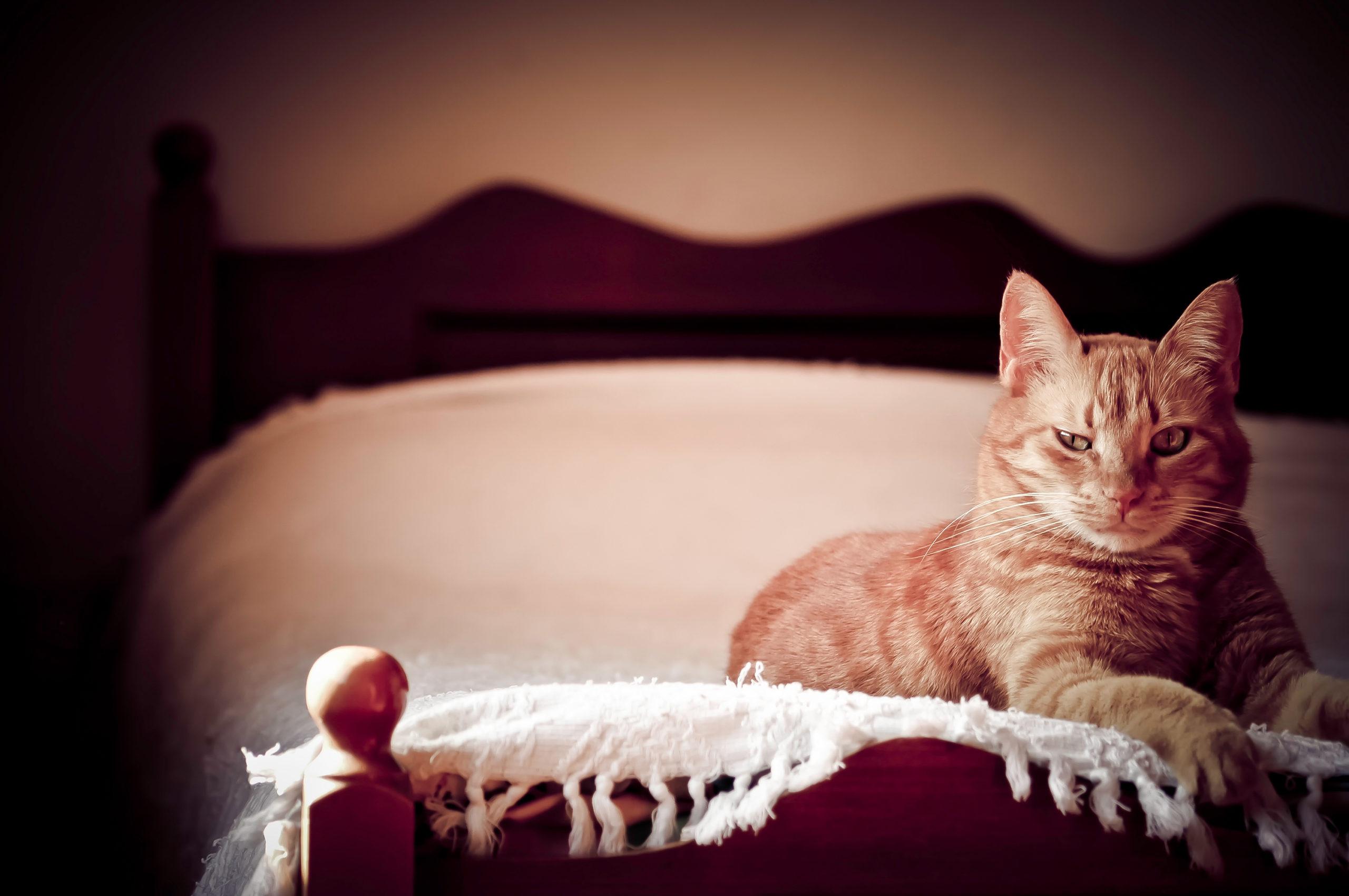 ネコを飼う初日までの準備:お部屋編