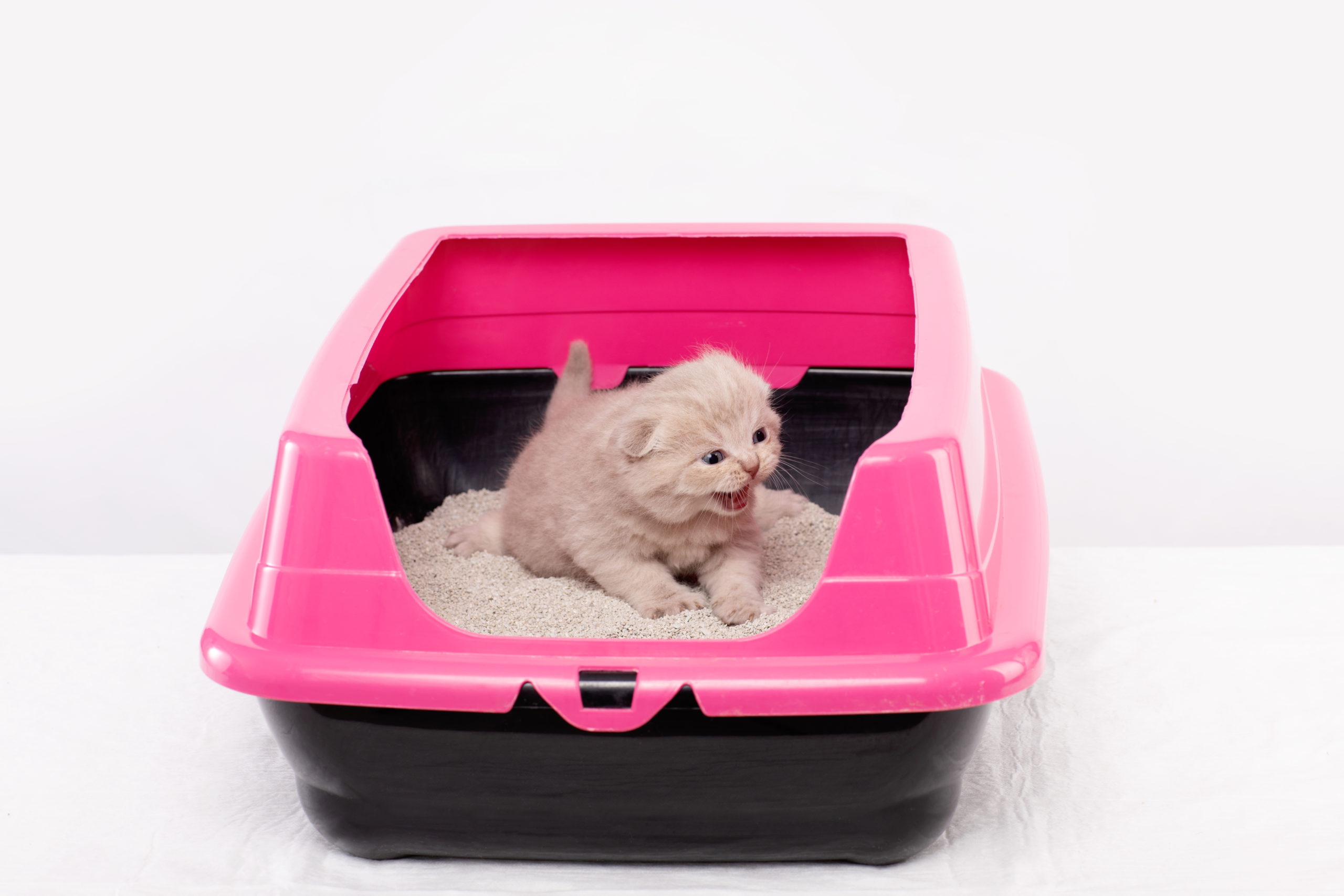 ネコがトイレのフチに足を掛けて排泄するのはナゼ?【原因は3つ】:まとめ