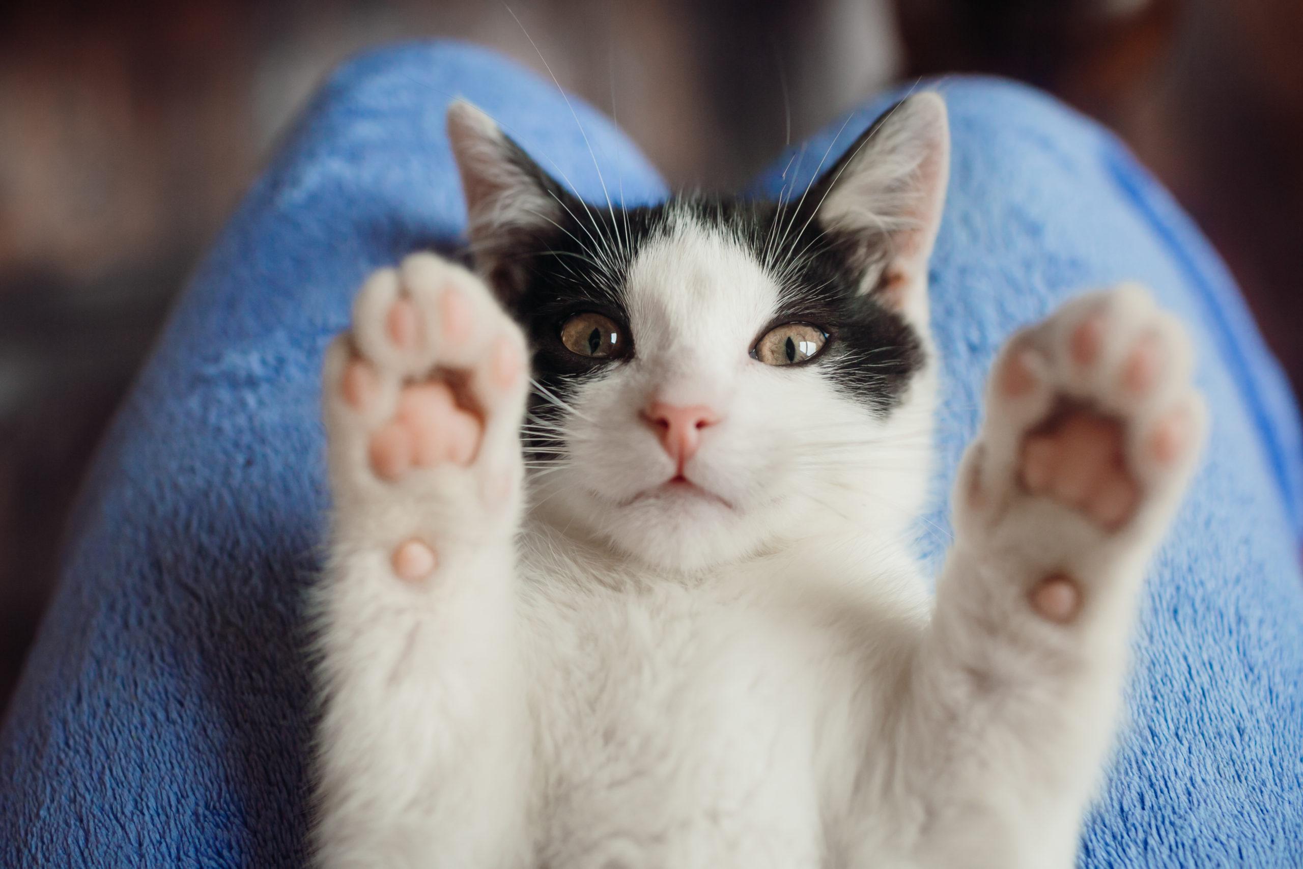 ネコを飼う上で気を付けるポイント:季節編