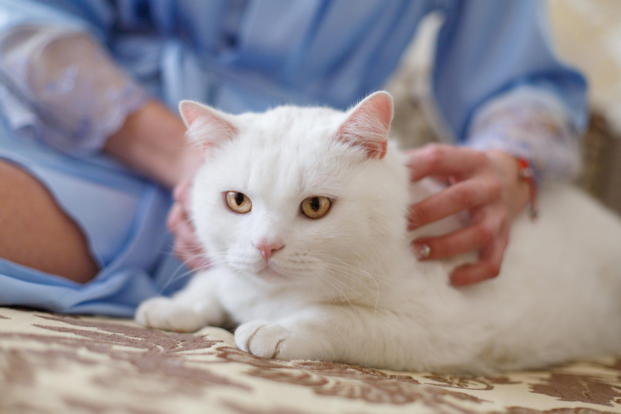 ネコのゴロゴロ音の正体とは?【実はあなたを癒す効果があります】