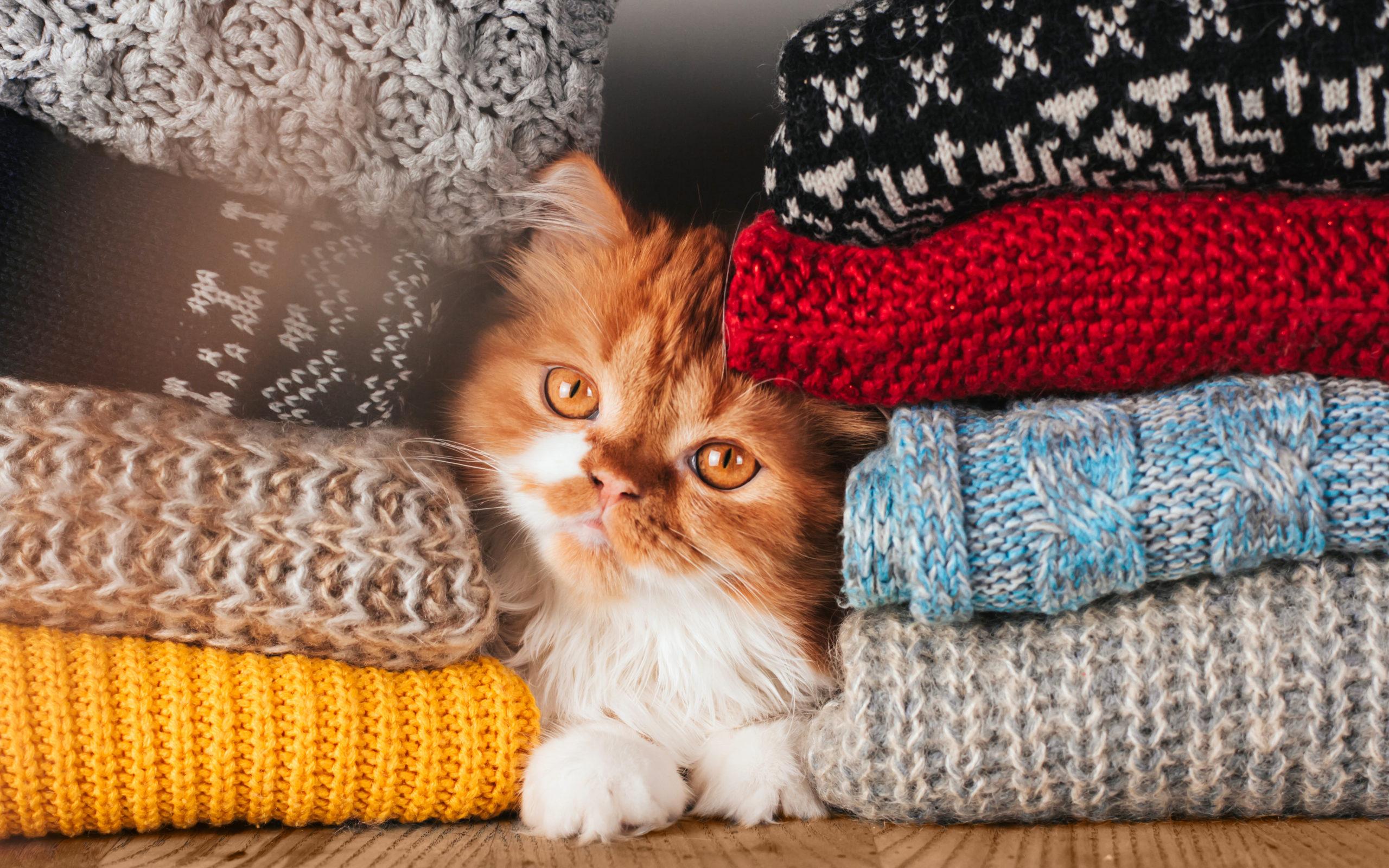 ネコウオッチングは好きですか?【自宅でもネコの魅力が隠れている】