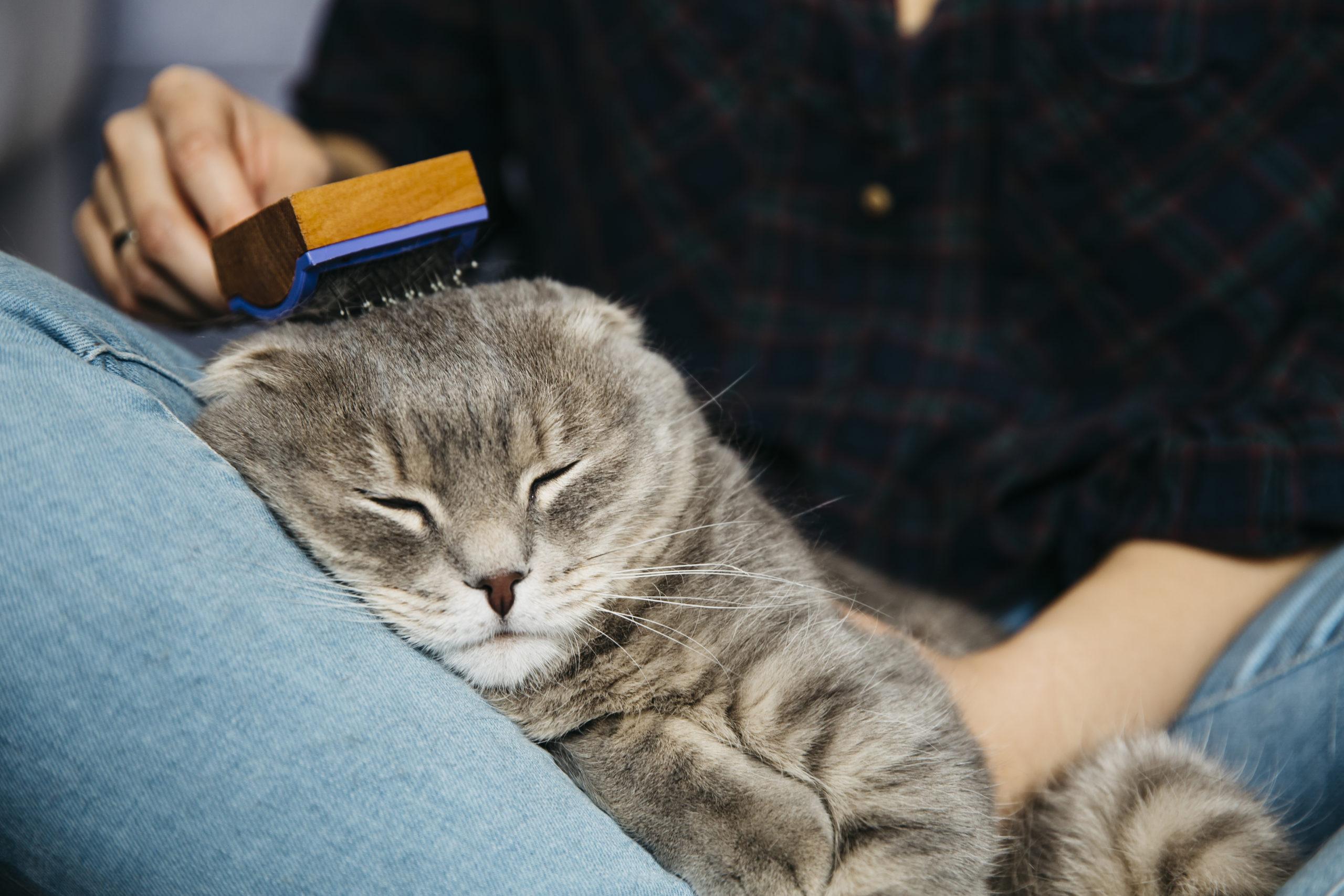 ネコにブラッシングは必要?