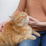 ネコぼゴロゴロ音の正体