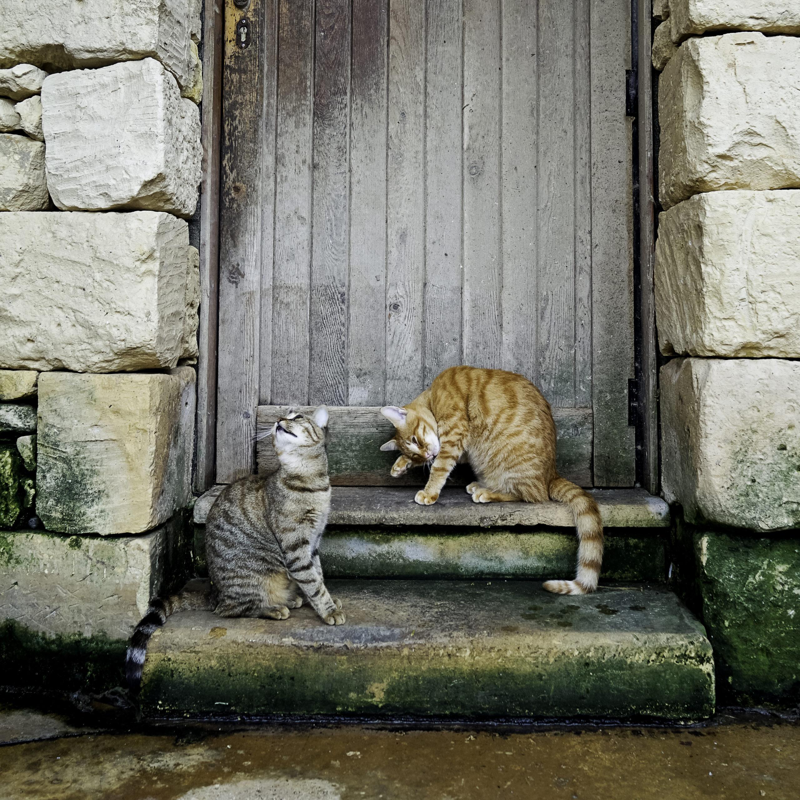 ネコが玄関で待っている3つの理由【実は意外な理由でした】