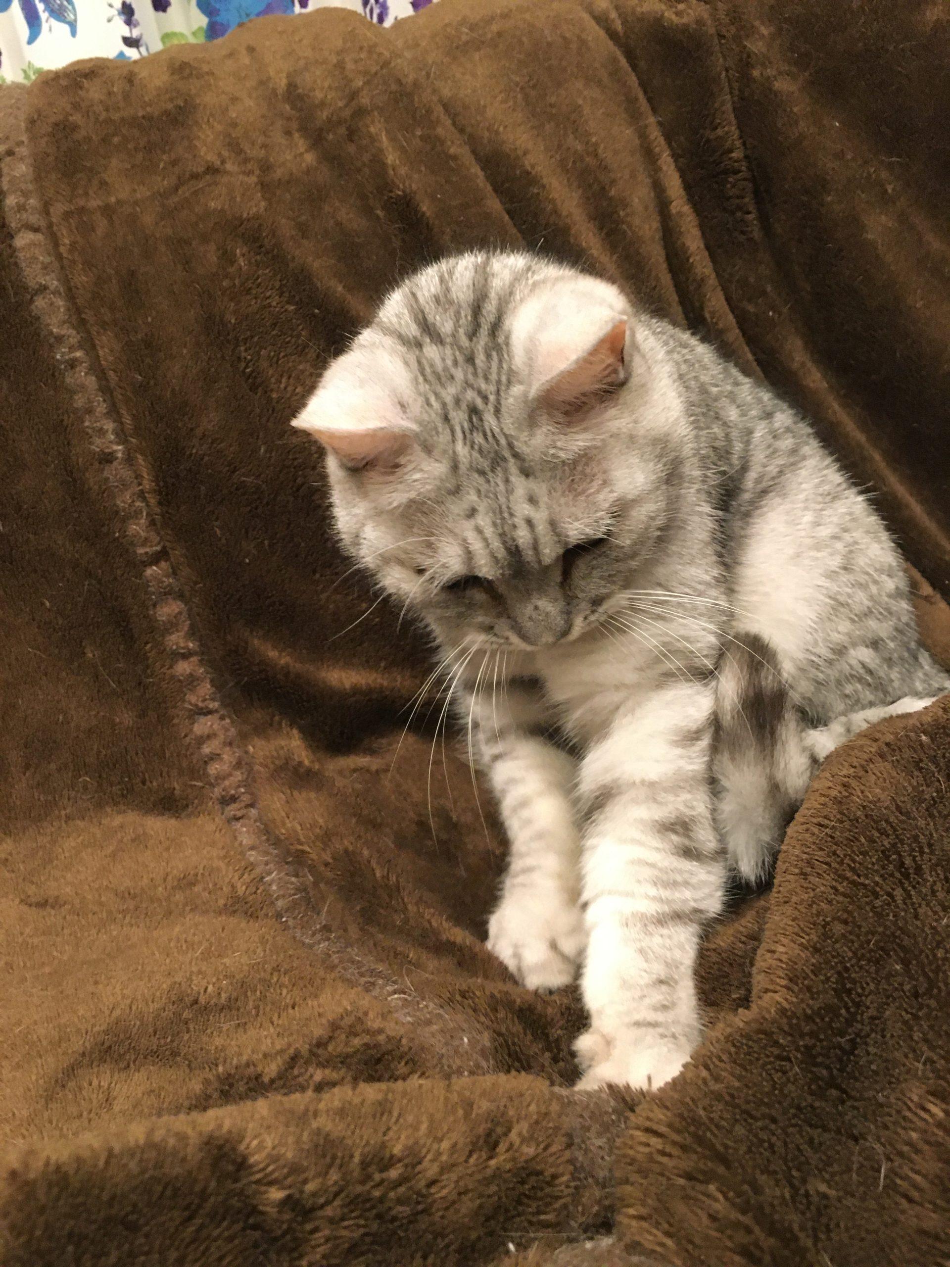 ネコが座布団や人をフミフミするのは何故?