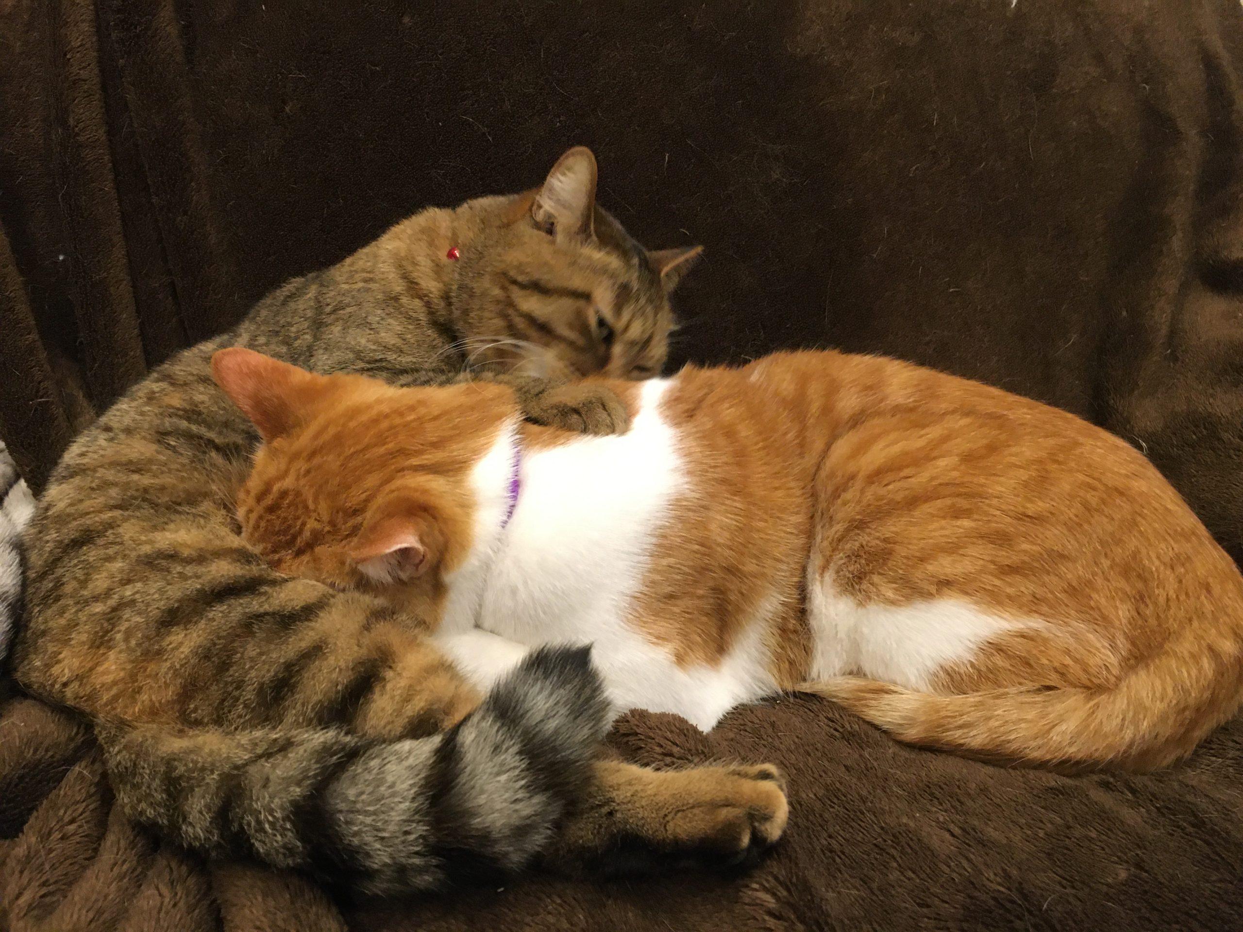 母猫のように暖かく柔らかいものに触れた時にモミモミする