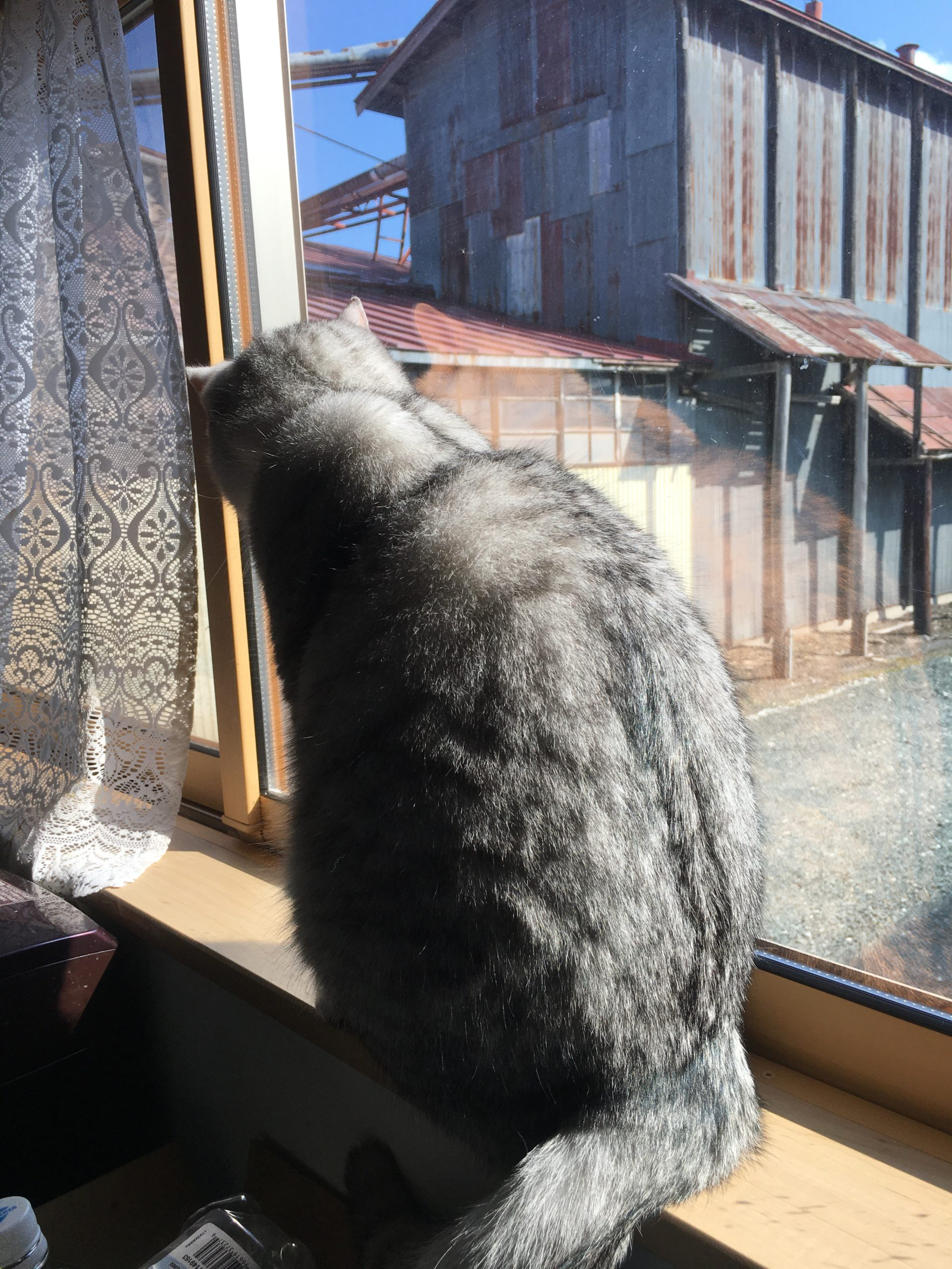ネコの一日の平均的な移動距離