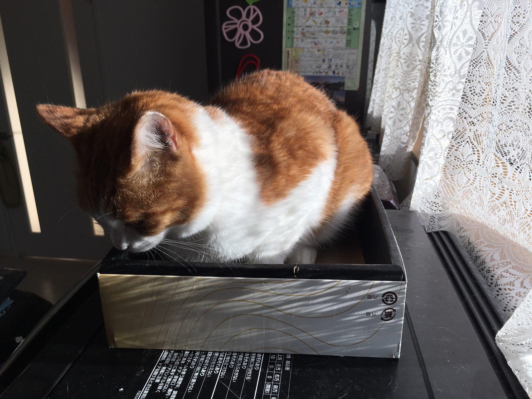ネコが段ボール箱を好きな理由:まとめ