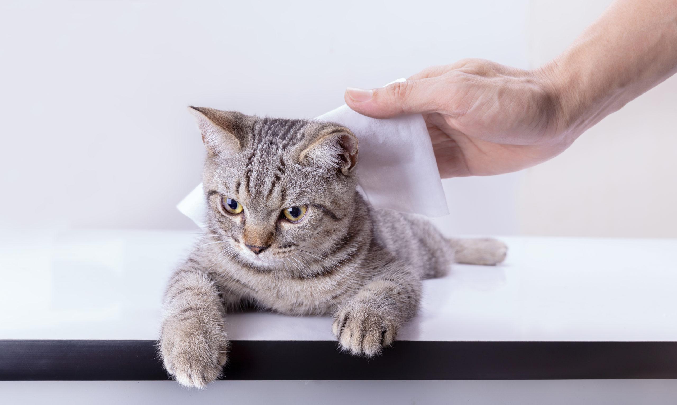 ペット初心者のネコの飼い方【初心者がネコを迎えるポイント】
