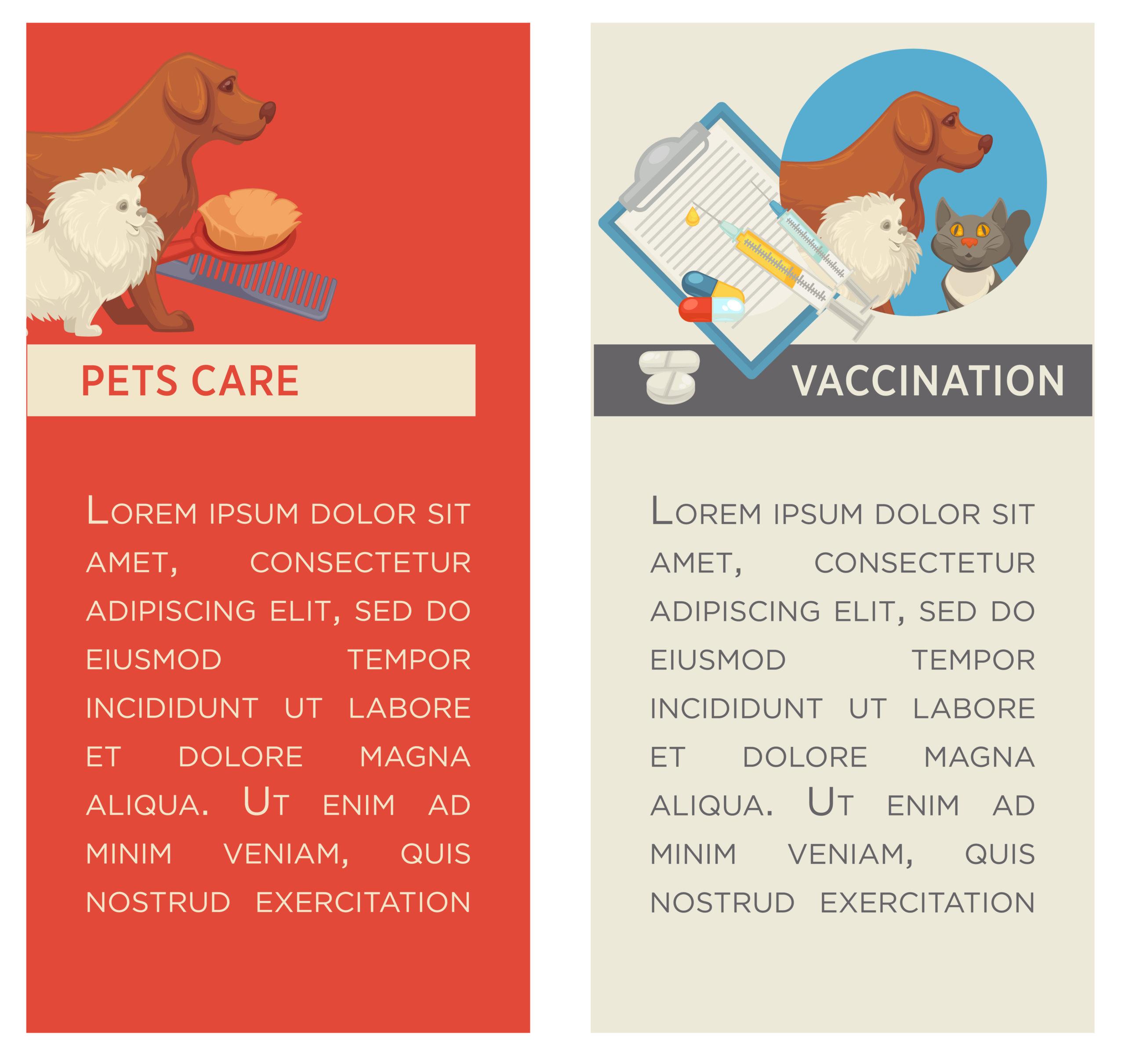ネコの保険を選ぶ時のポイント