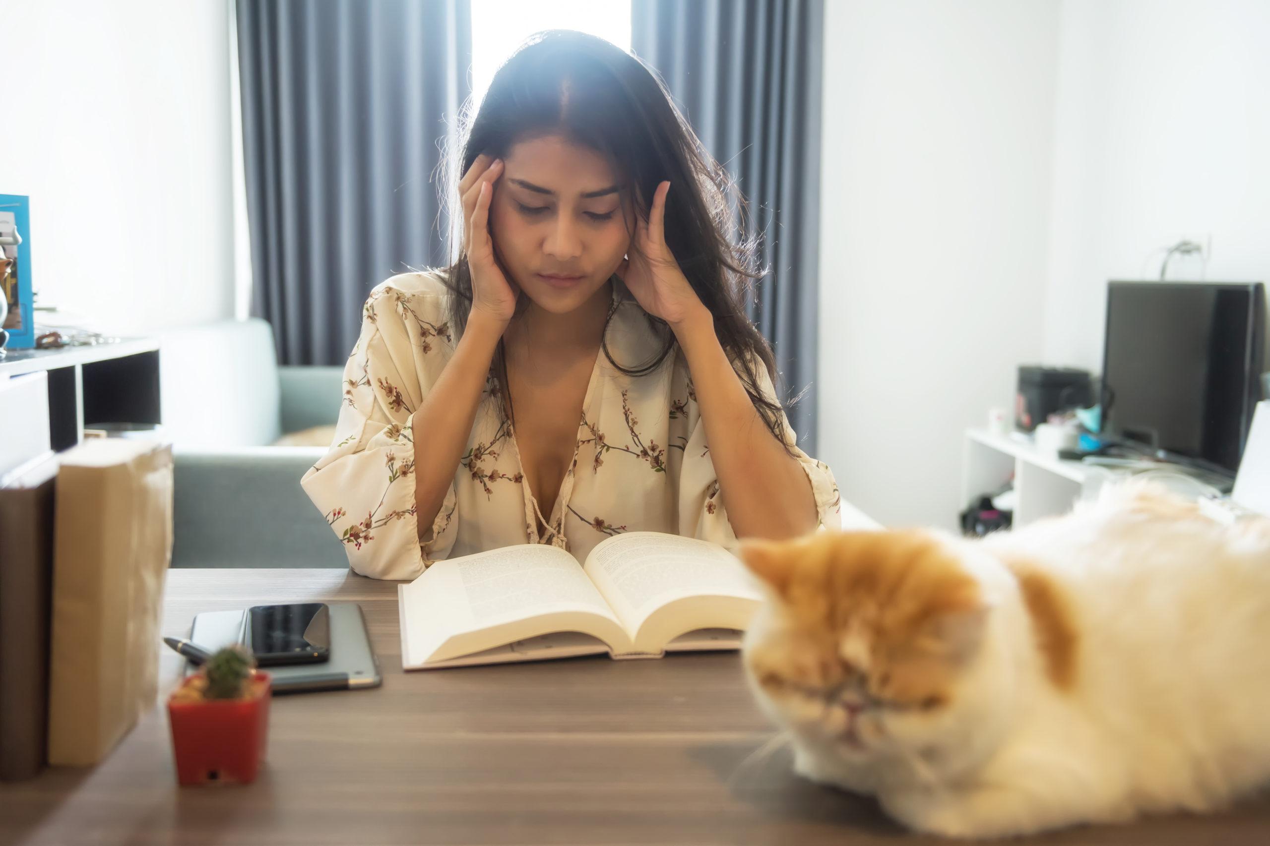 ネコがストレスを感じる7つの原因とは?【対策も併せて解説します】