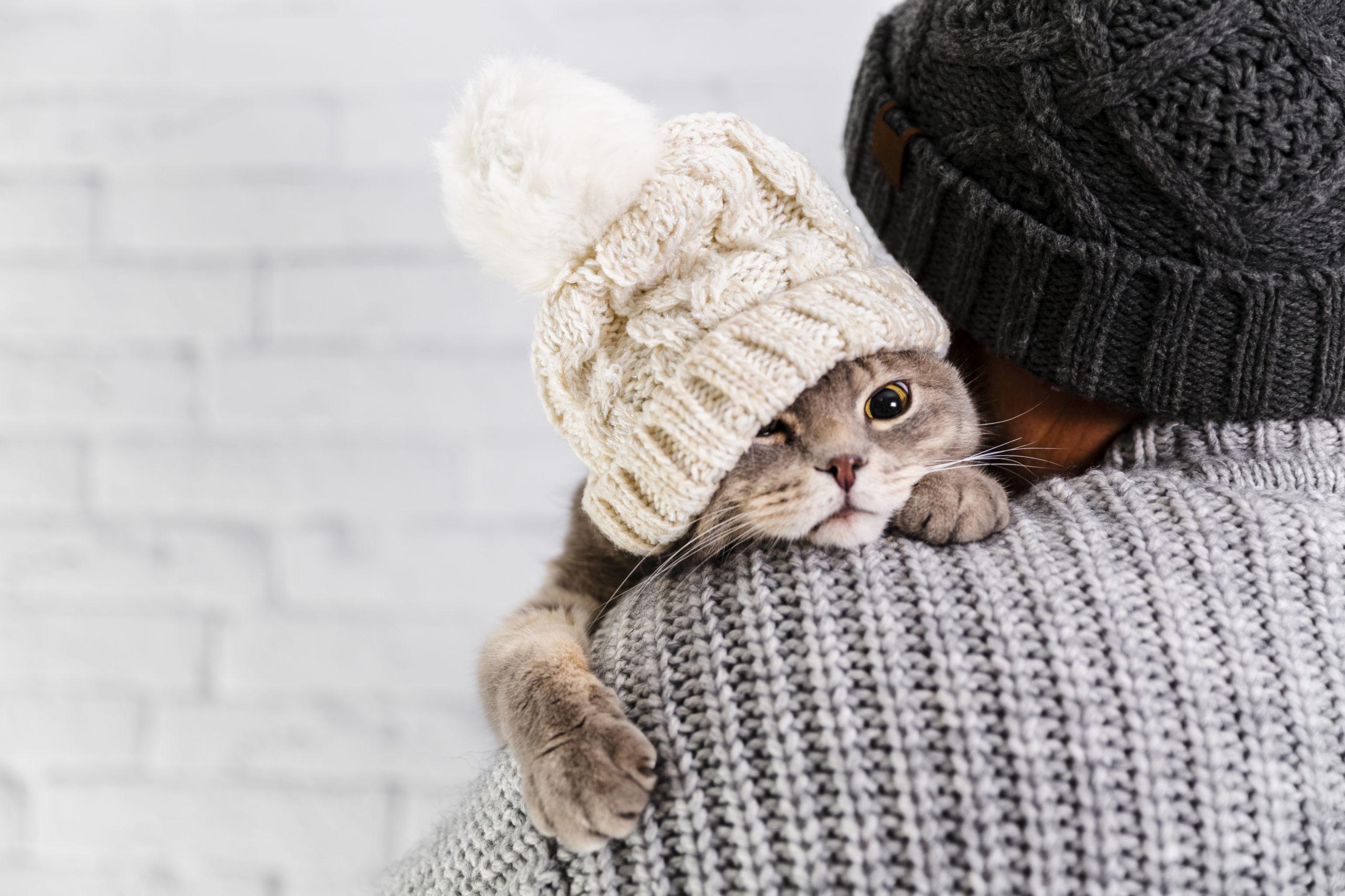 猫と仲良くなる3つの方法
