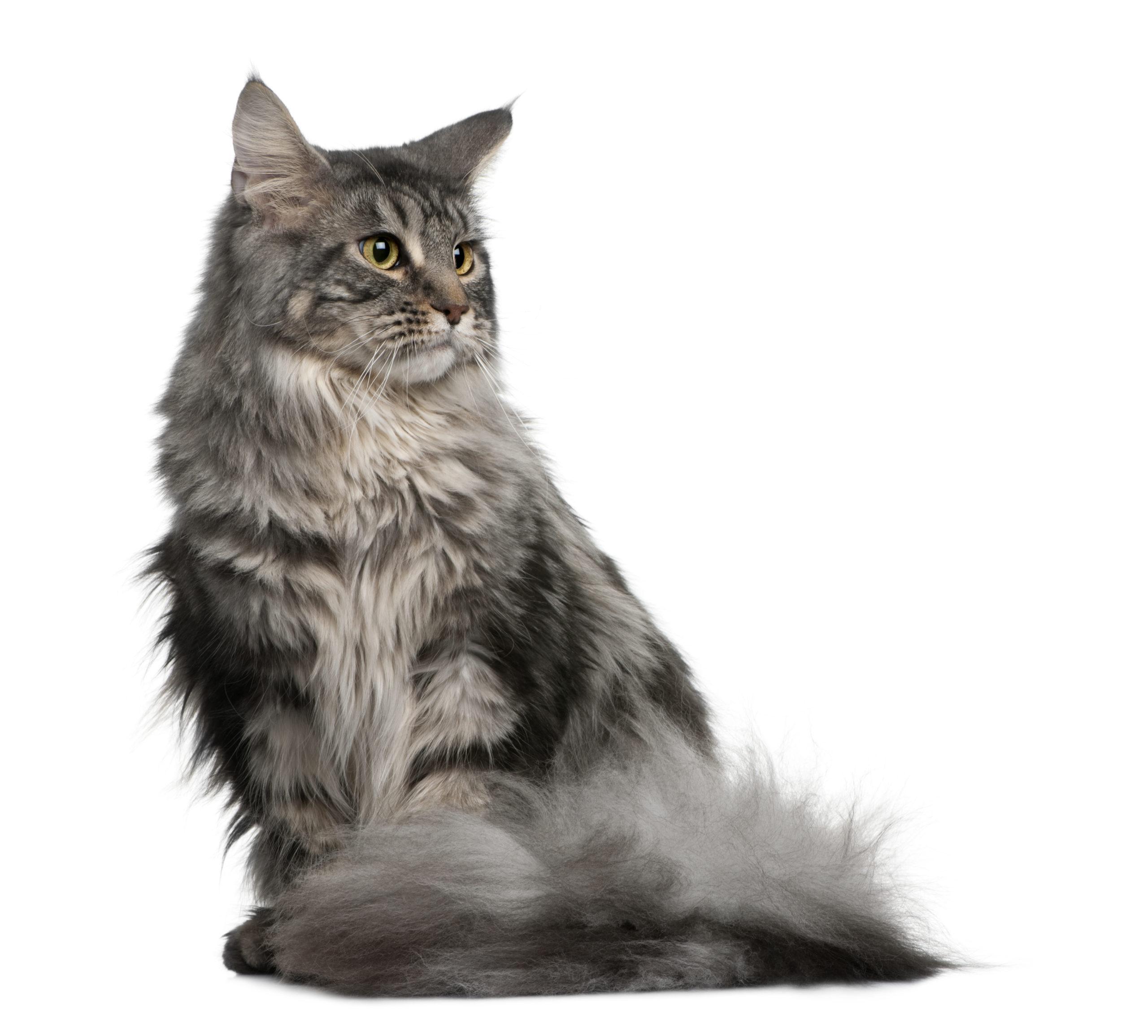 ネコの気持ちはシッポの動きで分かる?【8通りの気持ち別に解説】:まとめ
