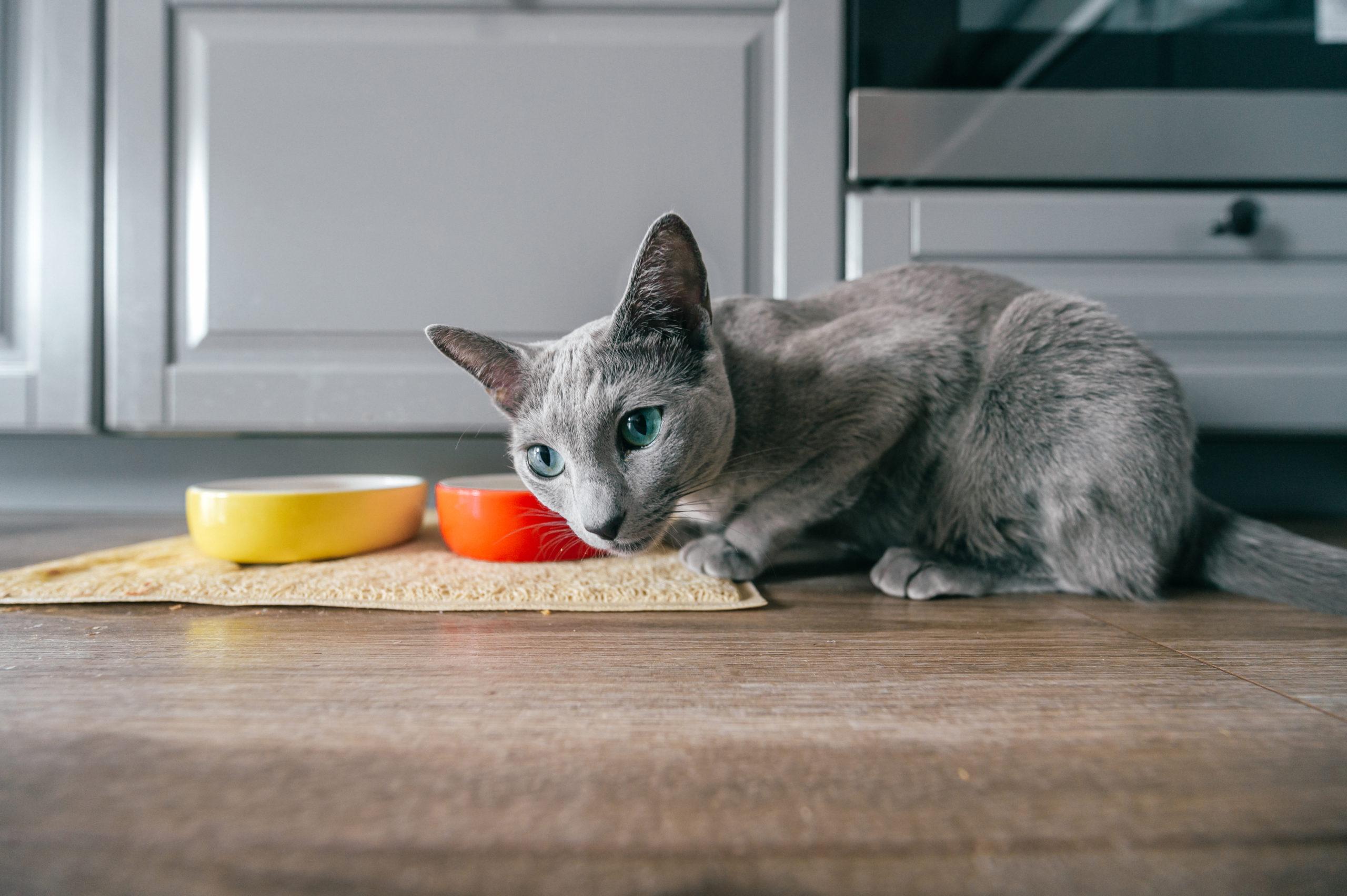 ネコがご飯を食べない原因:対策編