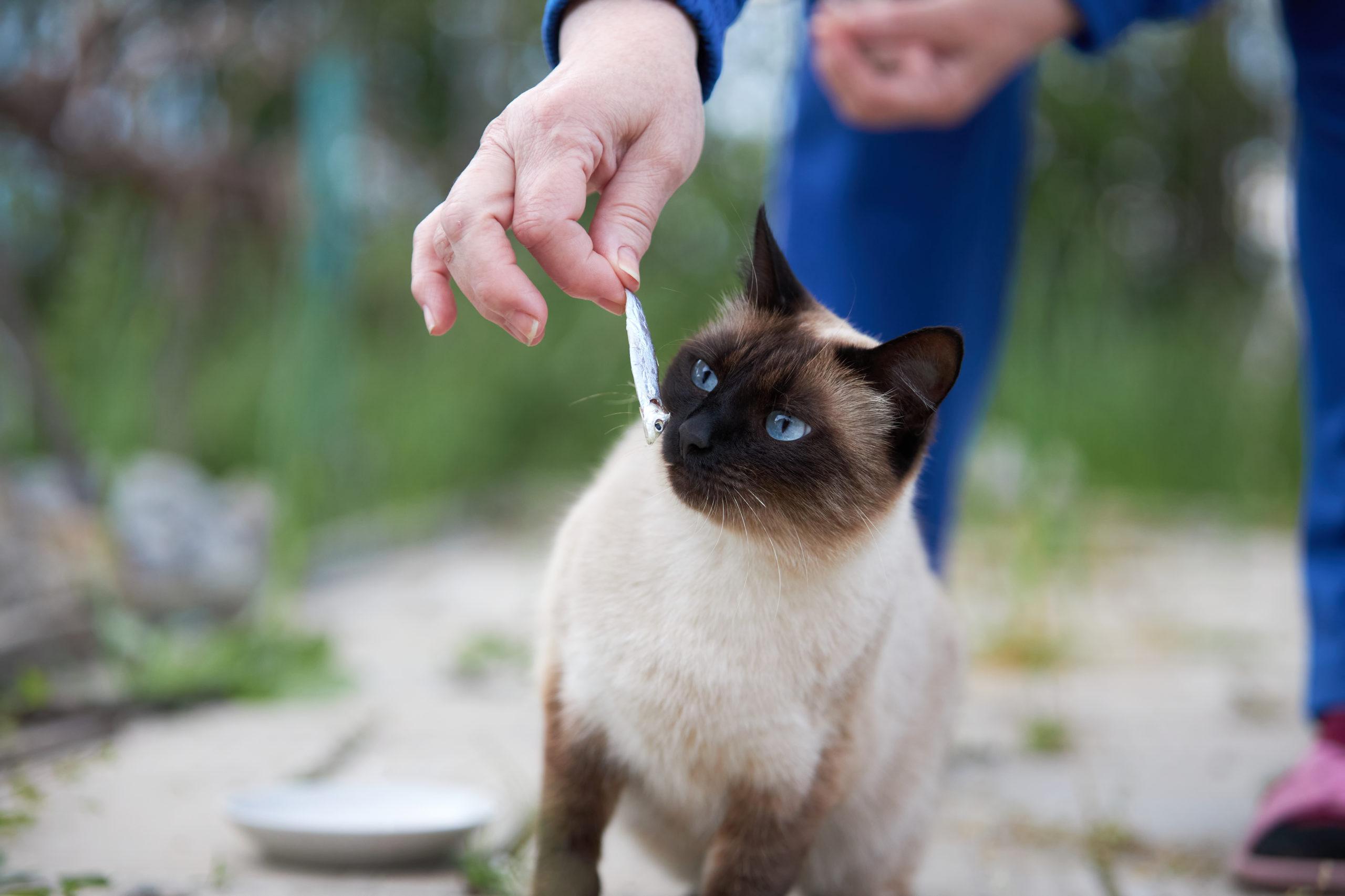 ネコにオヤツをあげるタイミング