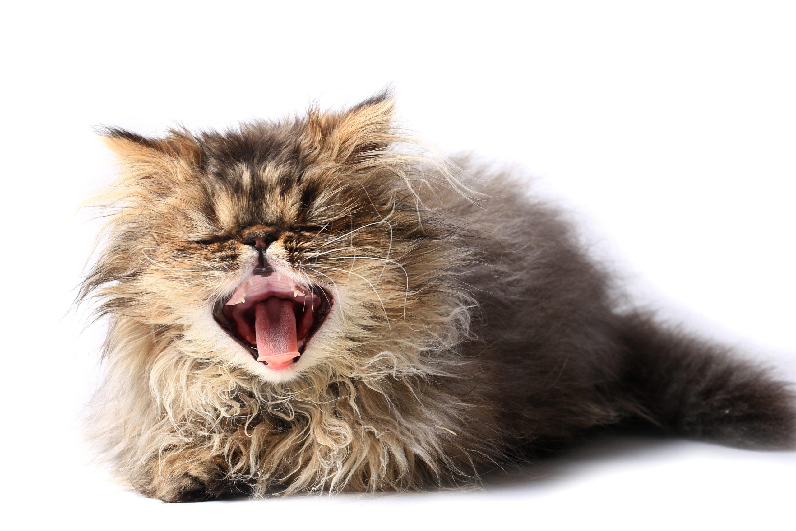 猫のくしゃみが連発するのはなぜ?