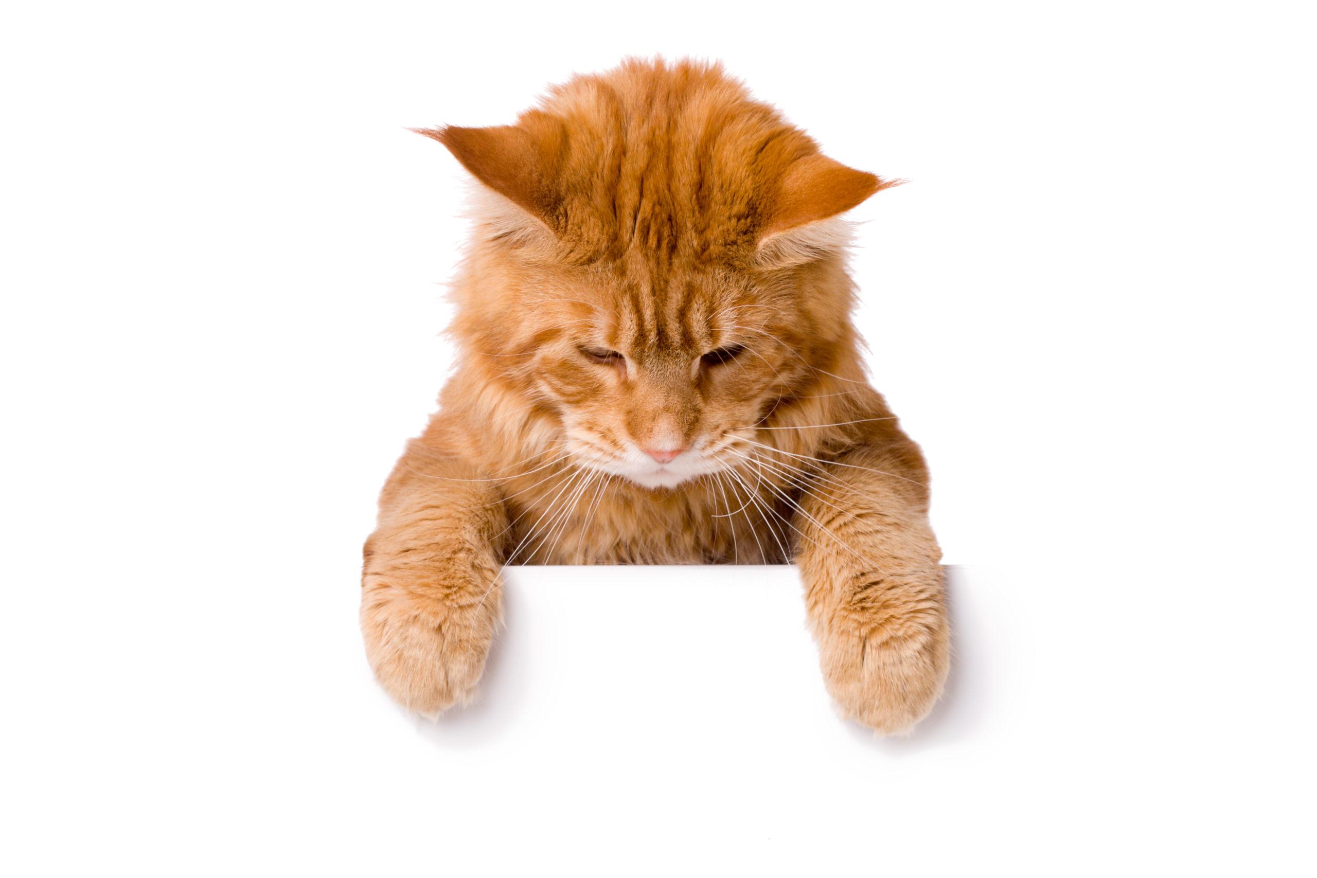 【知ってました?】ネコが吐く原因とは?毛玉以外を吐く場合は要注意