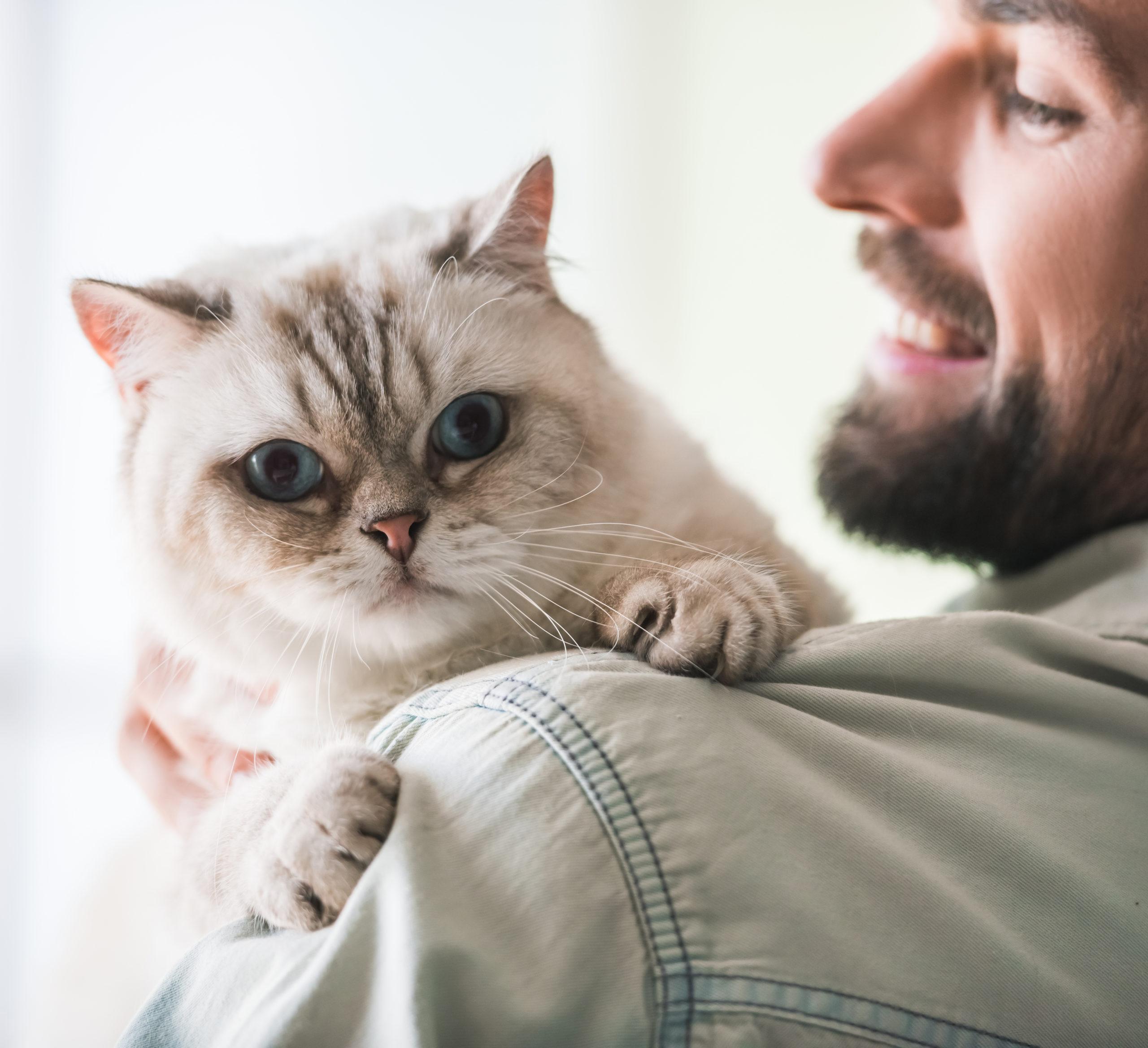 ネコを迎える心構え