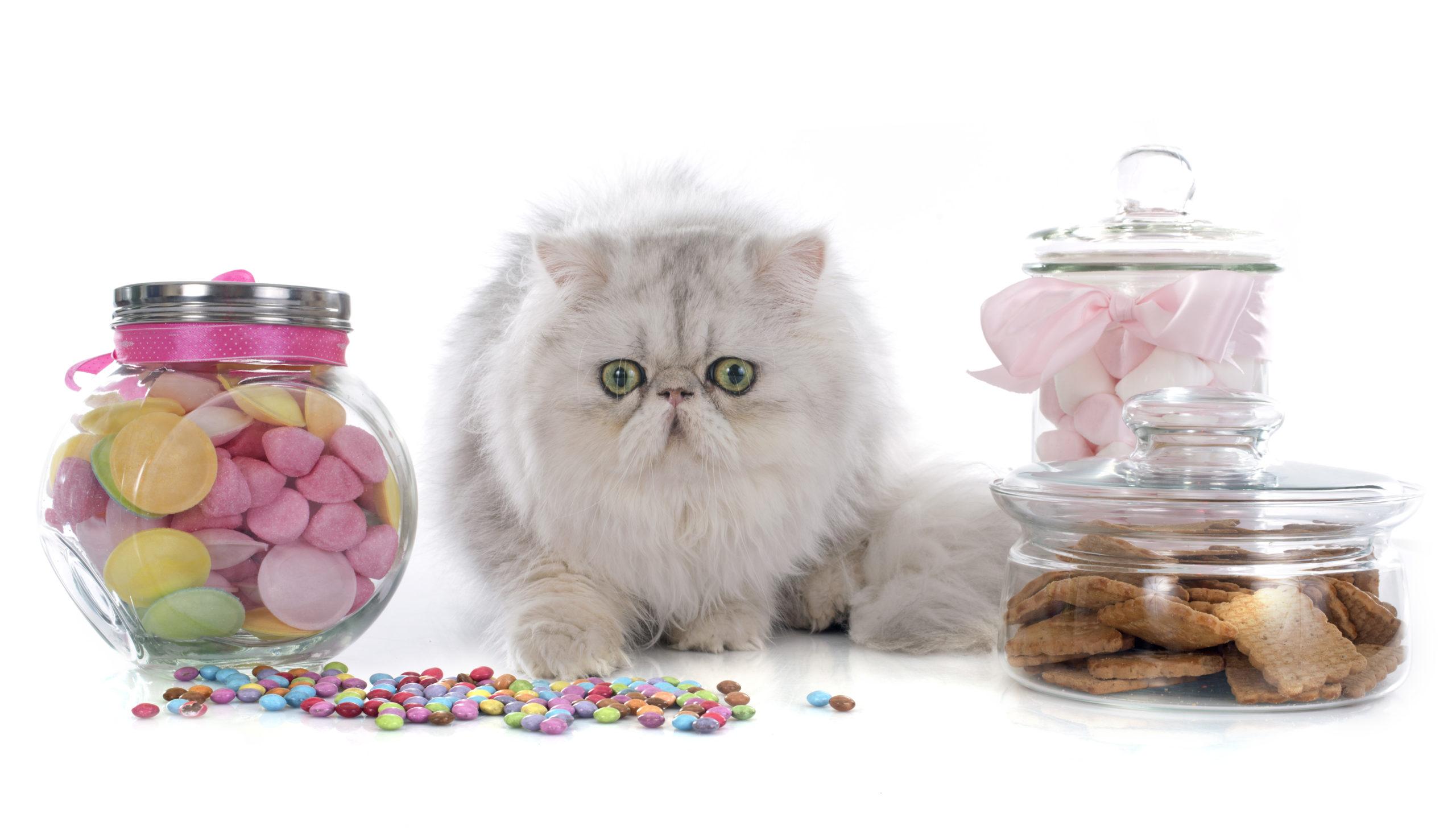 ネコのオヤツは主食とのバランスが大事
