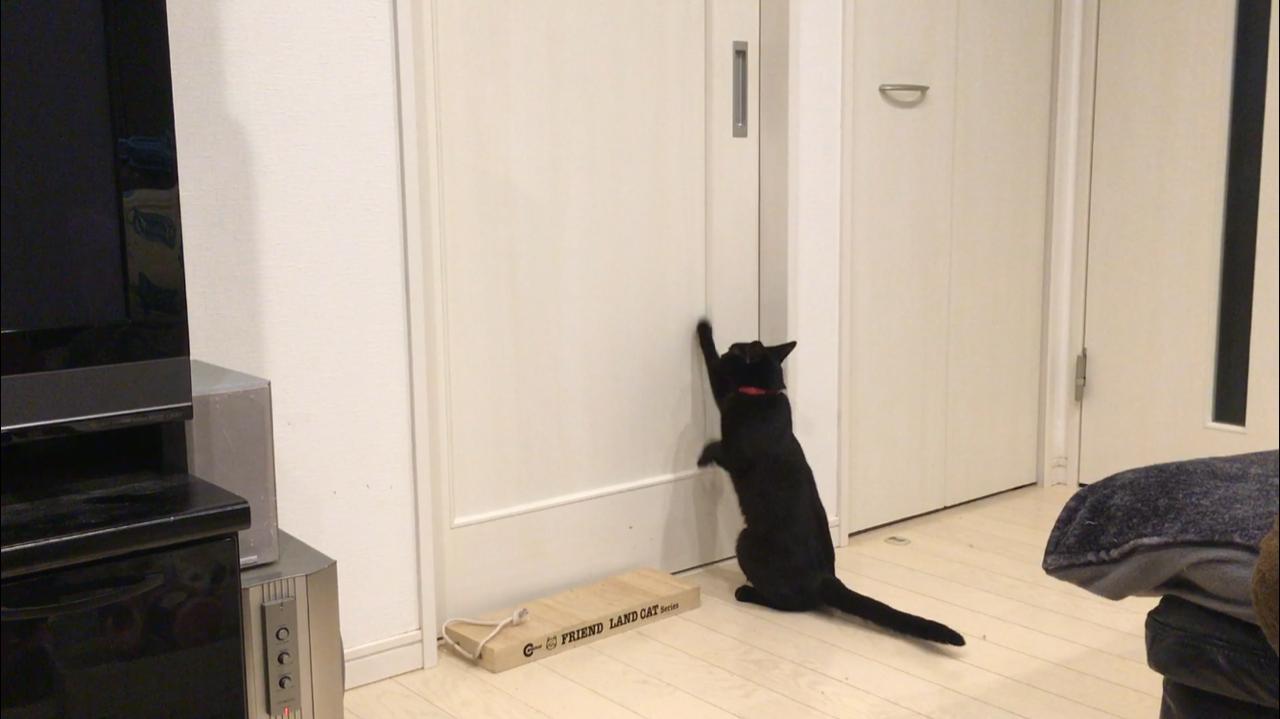 ネコがうるさい時の対策3つ