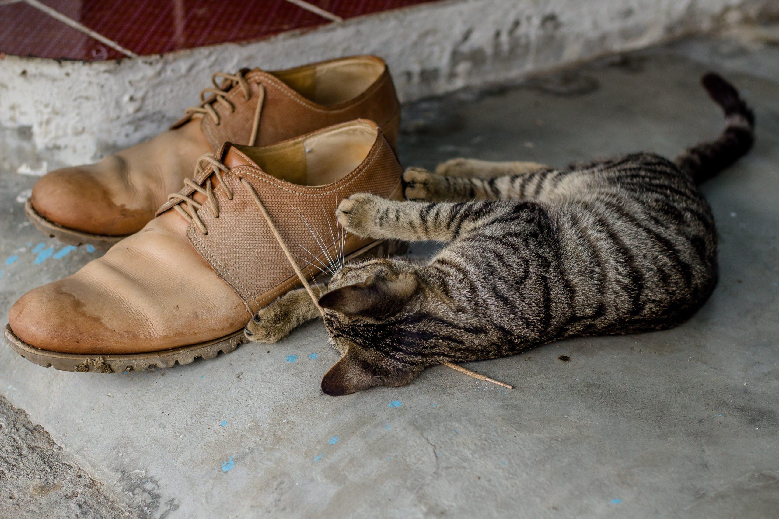 猫のしっぽを踏んづけてしまう原因