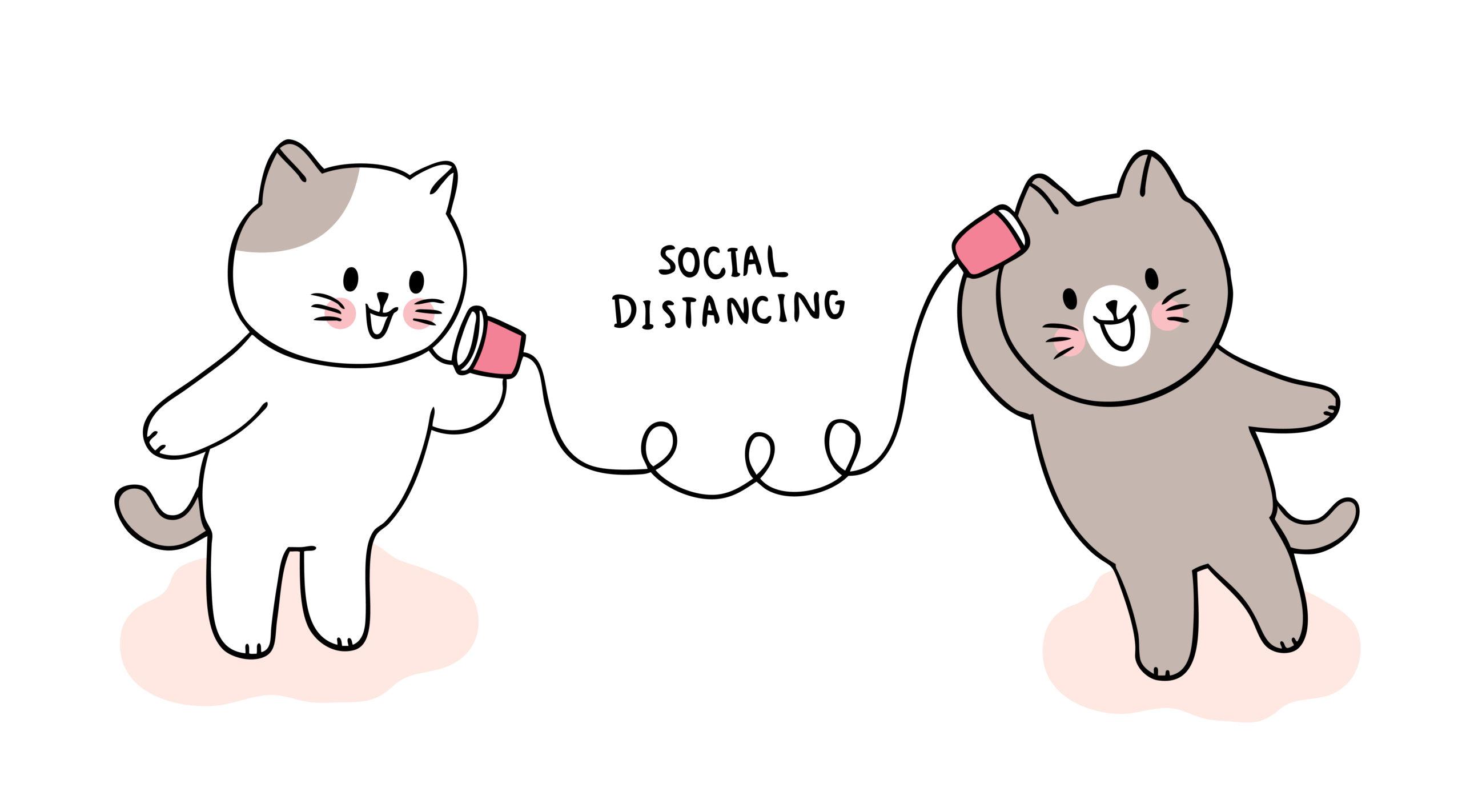 【2020年】しゃべる猫の動画【猫はしゃべることが出来る?】