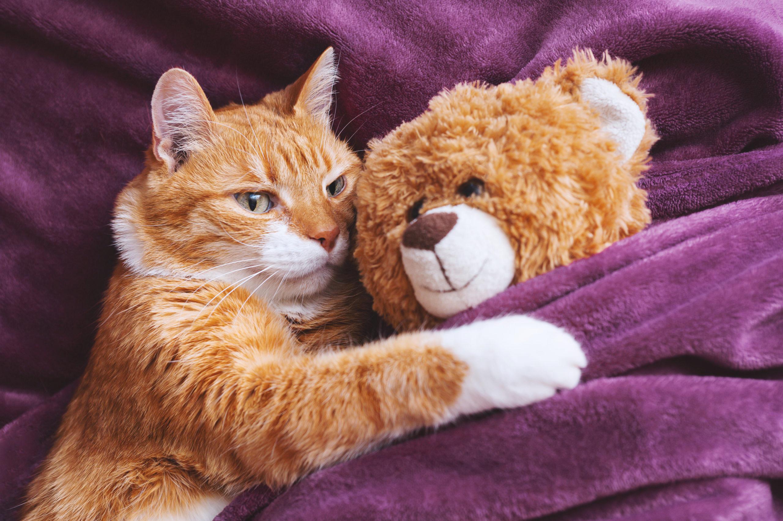 猫のおもちゃのおすすめ10選!【4匹飼っている僕が厳選】