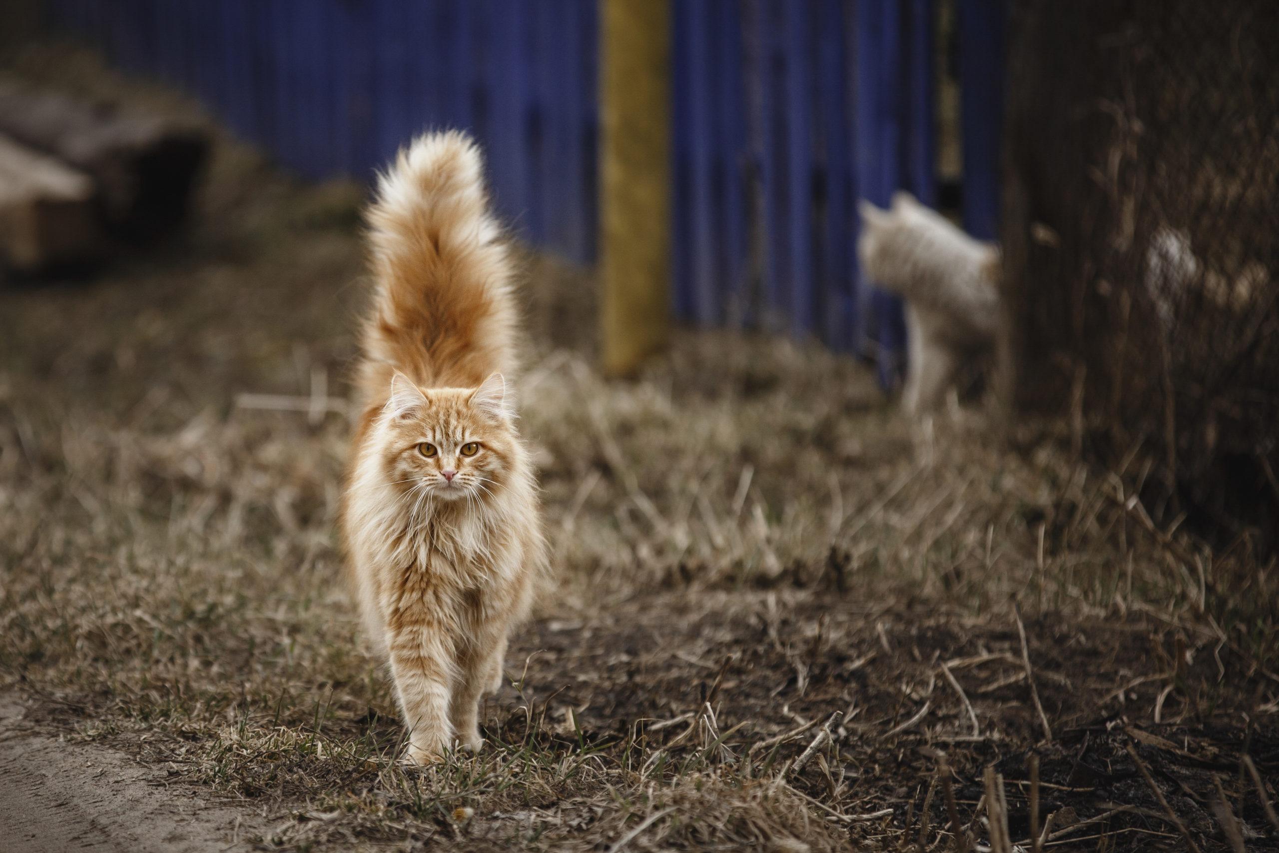 【可愛い】猫のしっぽがピーン【しっぽで分かる猫の気持ち】