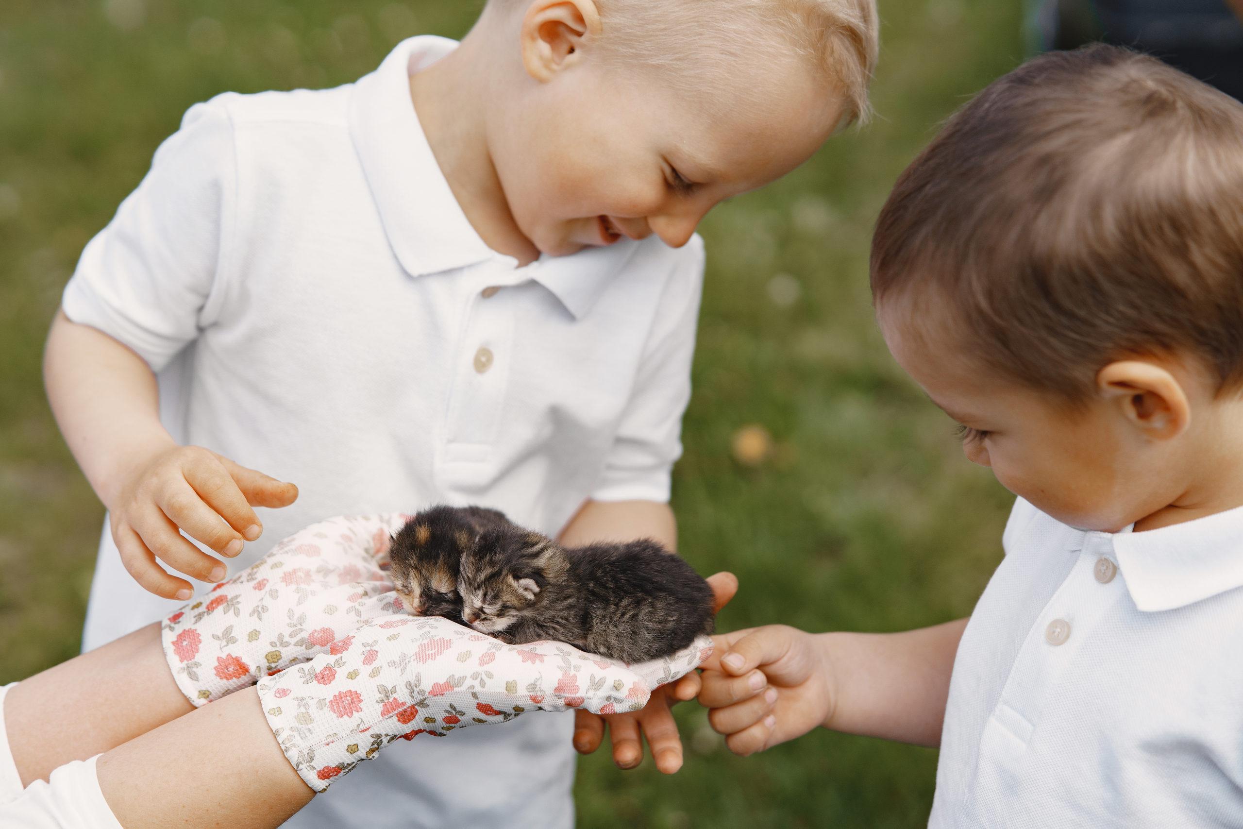 初めての子ネコの飼い方【初めて子ネコを迎えるあなたに届けたい】