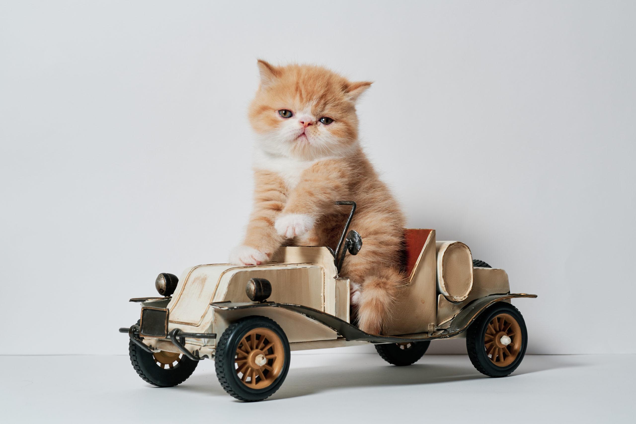 猫の面白い行動10選