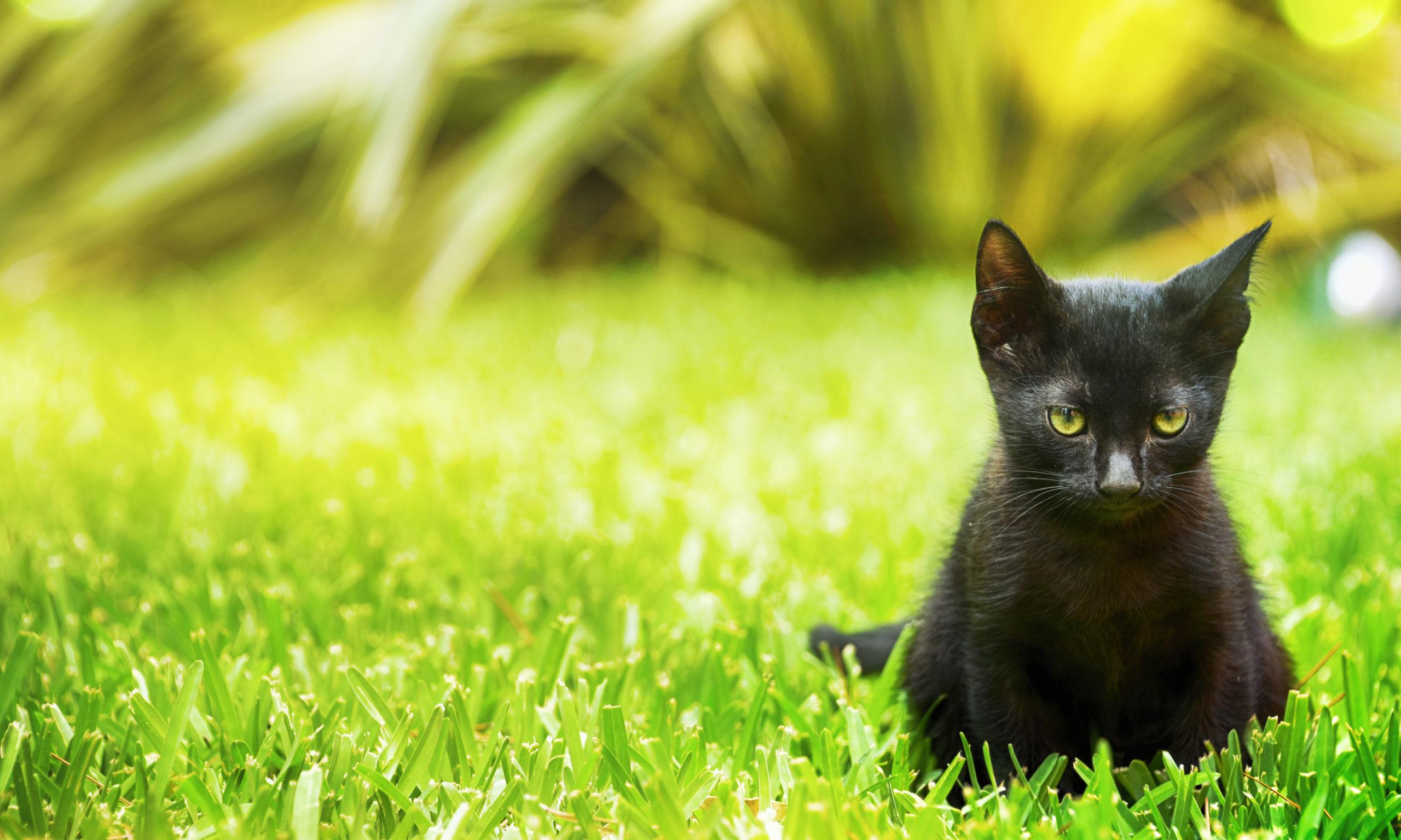 猫がご飯を食べない時の3つの対策